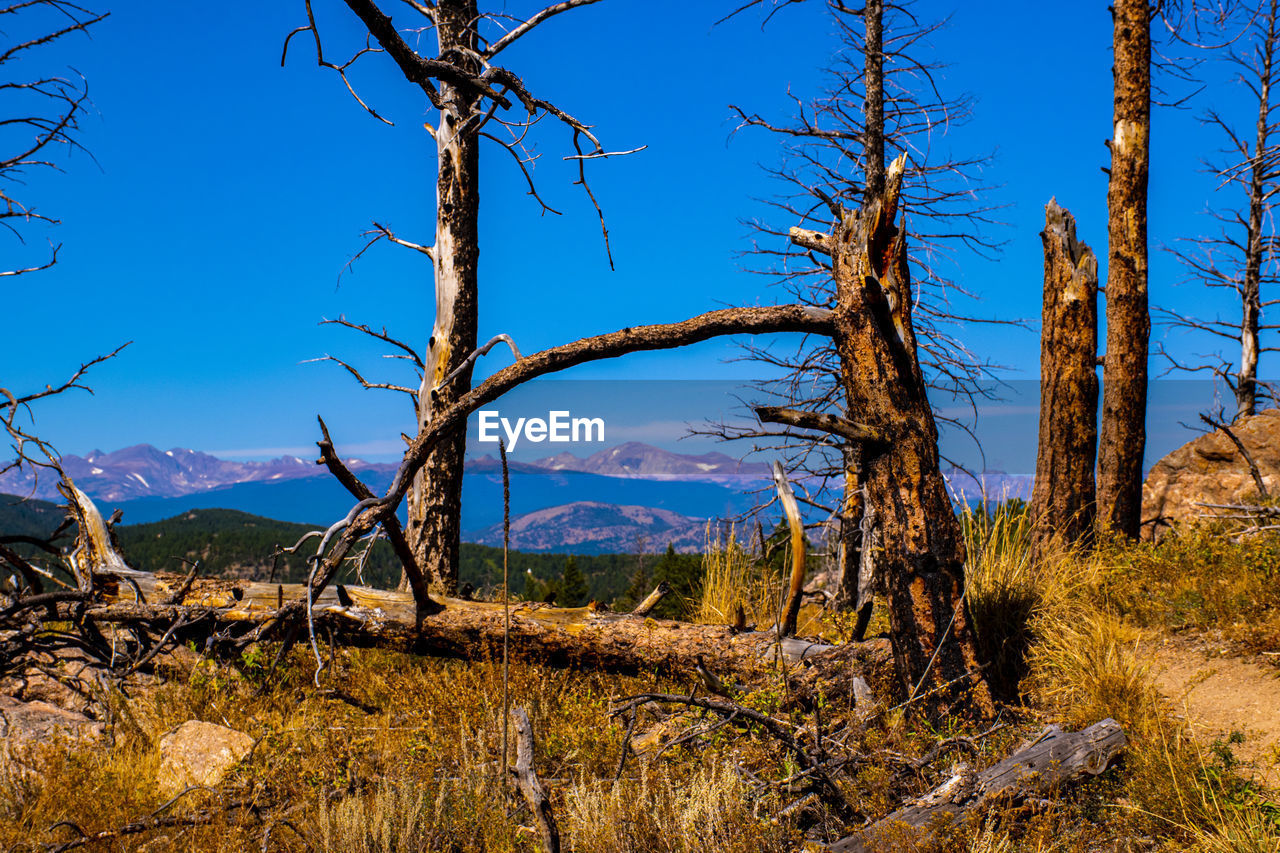 tranquil scene, tranquility, sky, tree, plant, beauty in nature, non-urban scene, scenics - nature, blue, environment, no people, mountain, landscape, nature, land, tree trunk, trunk, day, remote, bare tree, outdoors, dead plant, climate, arid climate