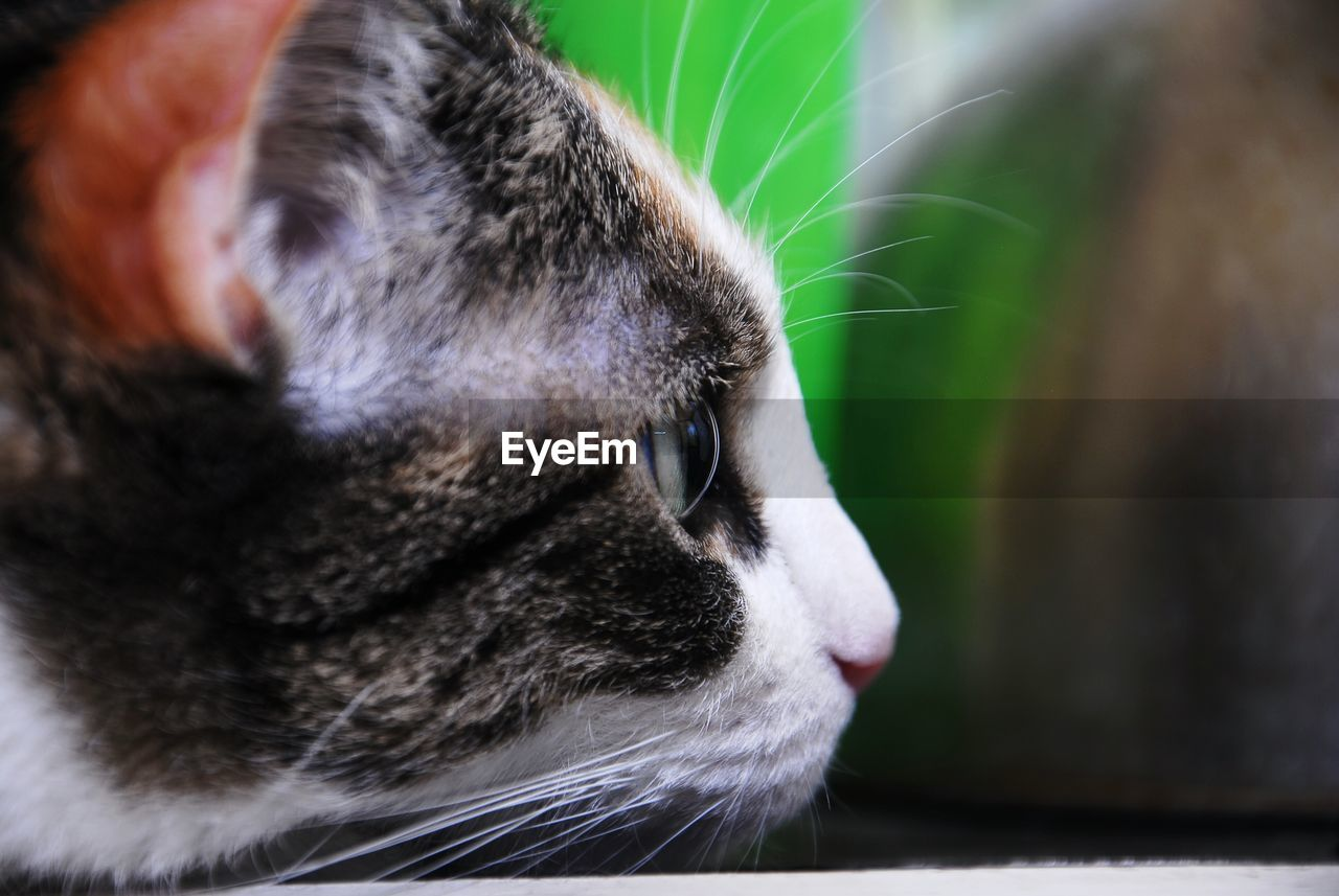 Close-Up Of Cat Stalking