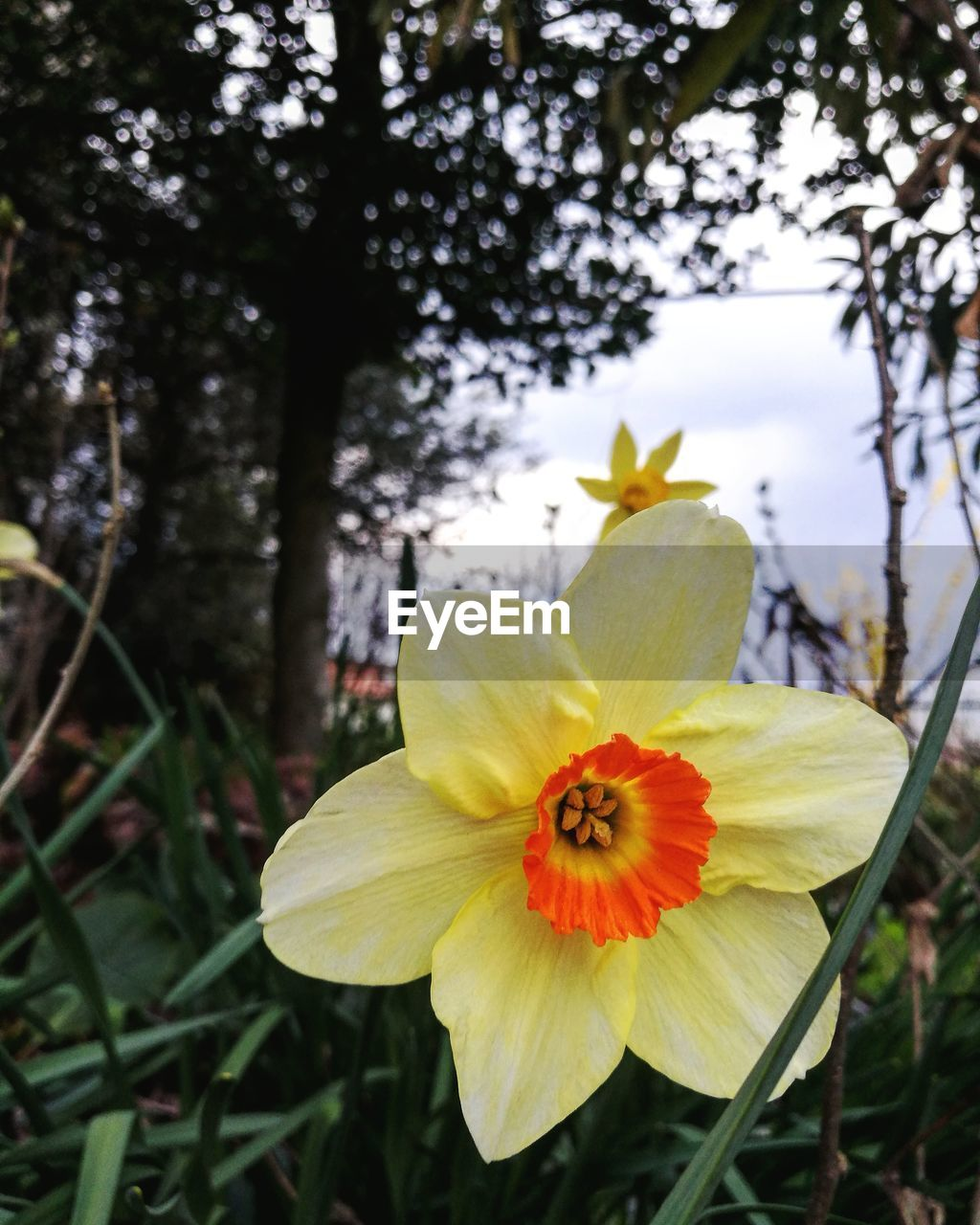 flowering plant, flower, plant, petal, fragility, freshness, vulnerability, growth, flower head, beauty in nature, inflorescence, yellow, close-up, focus on foreground, nature, day, tree, no people, pollen, outdoors, springtime