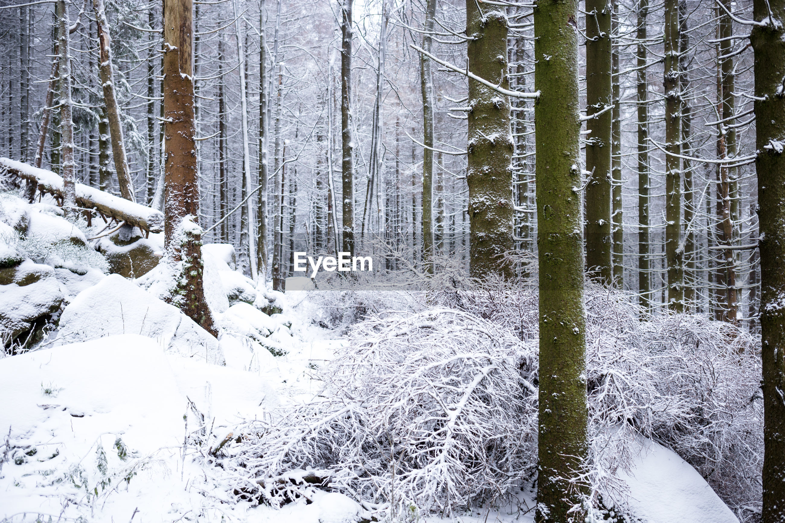 VIEW OF TREES IN SNOW