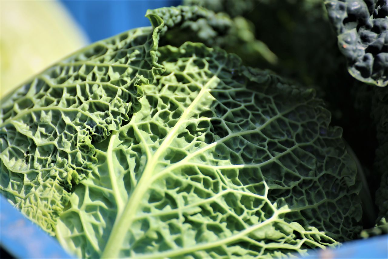 healthy eating, food and drink, vegetable, food, green color, close-up, wellbeing, freshness, leaf, cabbage, plant part, selective focus, no people, raw food, still life, day, organic, growth, nature, kale, vegetarian food, leaves
