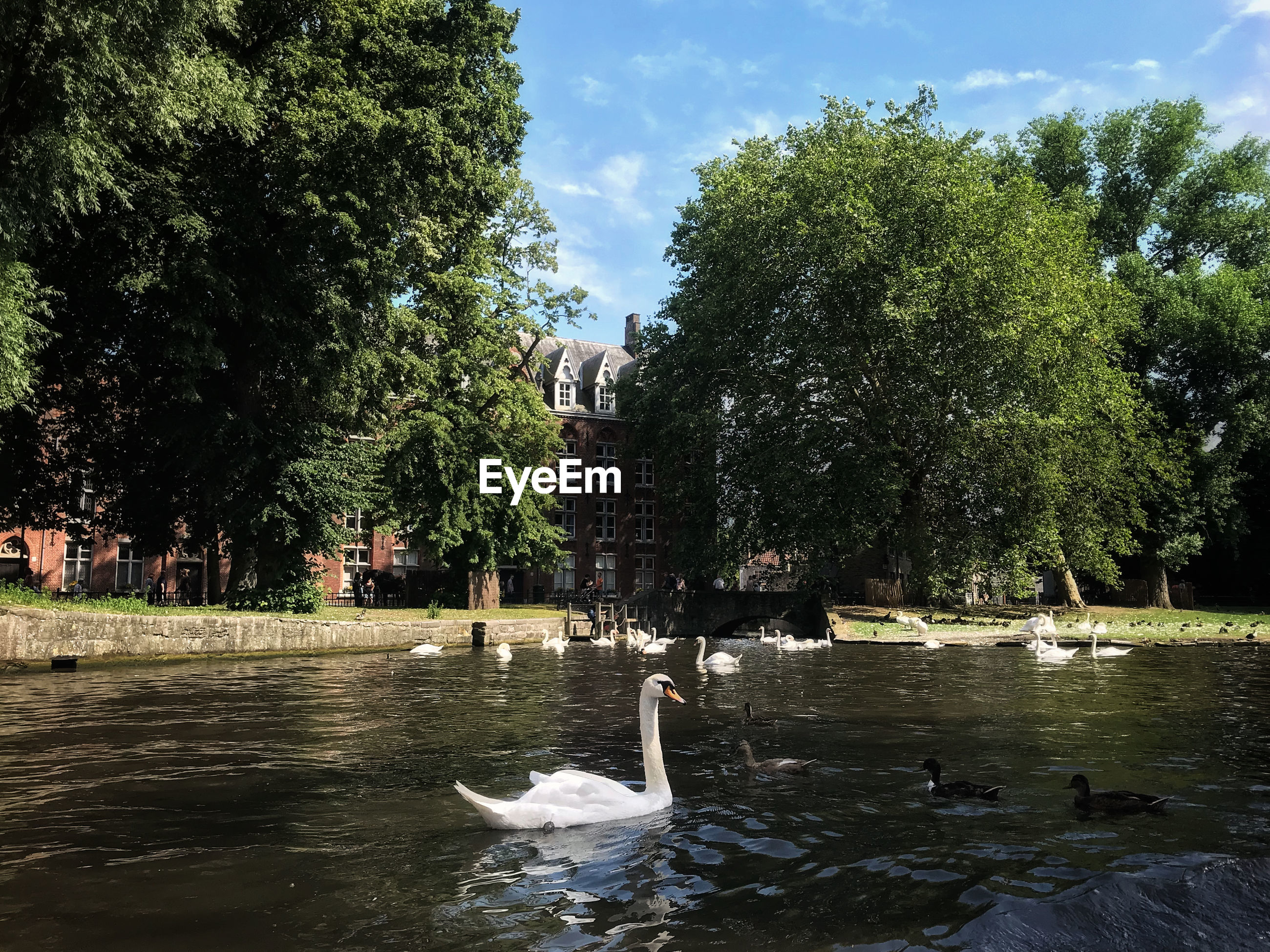 VIEW OF SWAN SWIMMING IN LAKE AGAINST TREES