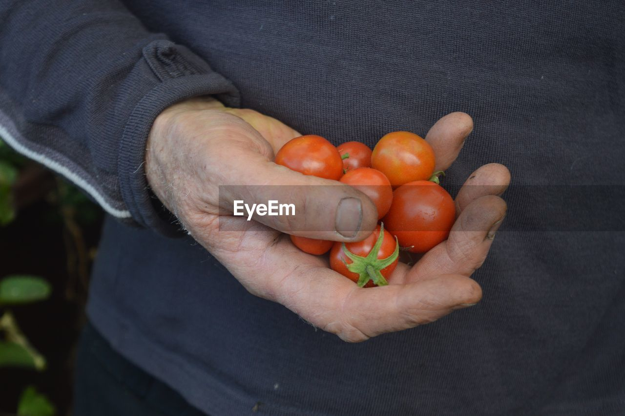 Midsection Of Man Holding Cherry Tomatoes