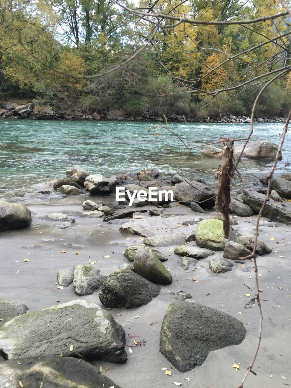 water, tree, nature, day, no people, beauty in nature, tranquility, river, outdoors, rock - object, tranquil scene, scenics, beach