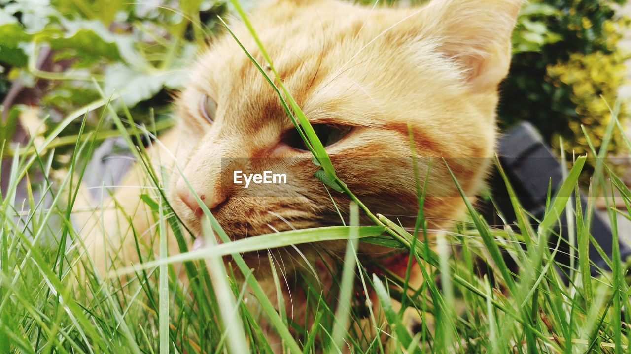 one animal, grass, animal themes, mammal, domestic animals, pets, domestic cat, feline, no people, day, relaxation, nature, close-up, outdoors, sitting