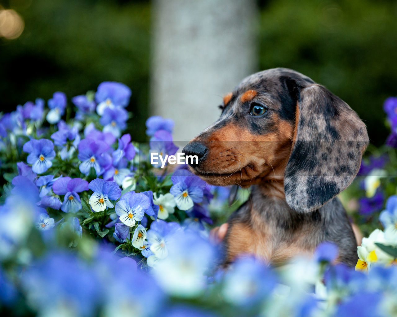 one animal, canine, dog, animal themes, flower, flowering plant, domestic, animal, domestic animals, pets, mammal, plant, selective focus, close-up, no people, vertebrate, looking, purple, day, growth, animal head
