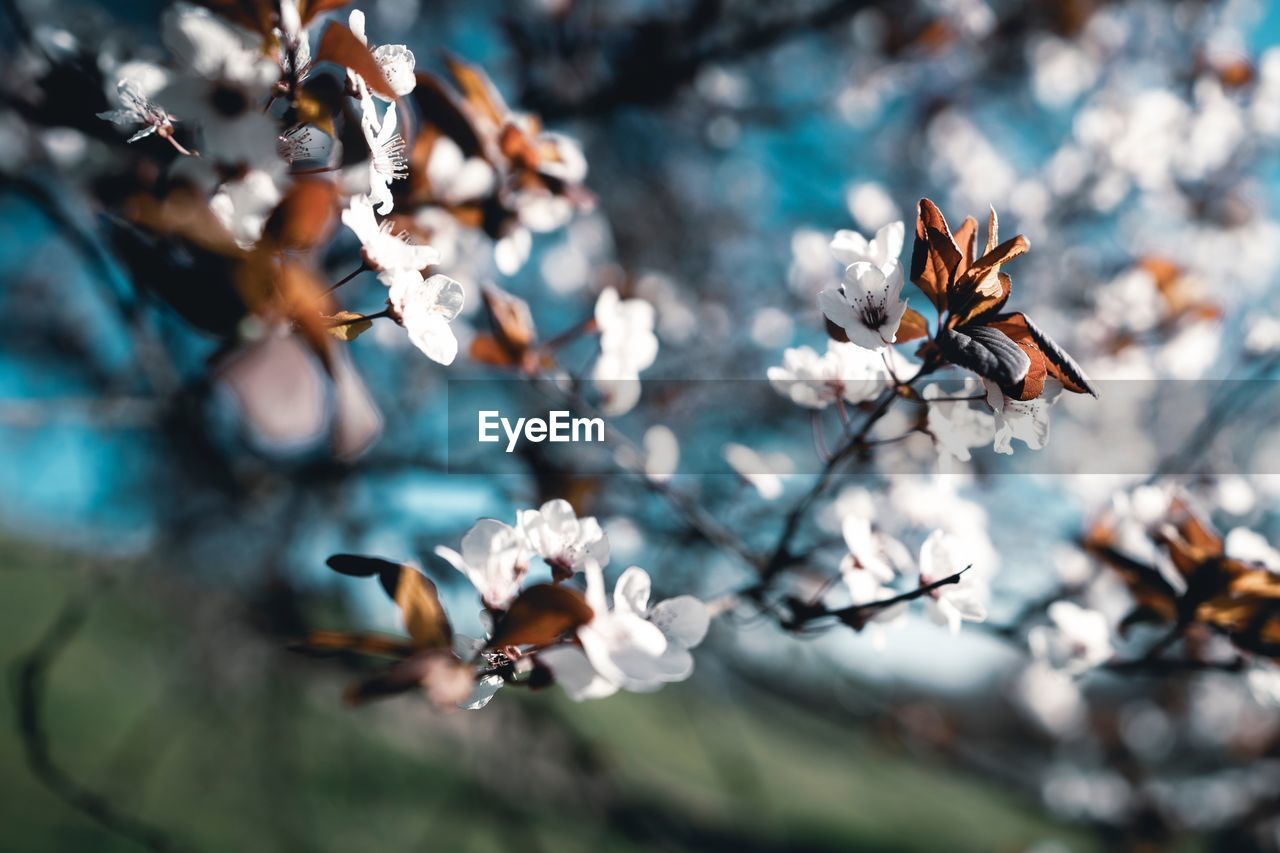flower, flowering plant, beauty in nature, fragility, vulnerability, plant, freshness, growth, close-up, selective focus, petal, day, nature, no people, flower head, animal wildlife, animals in the wild, insect, focus on foreground, invertebrate, pollen, outdoors, pollination