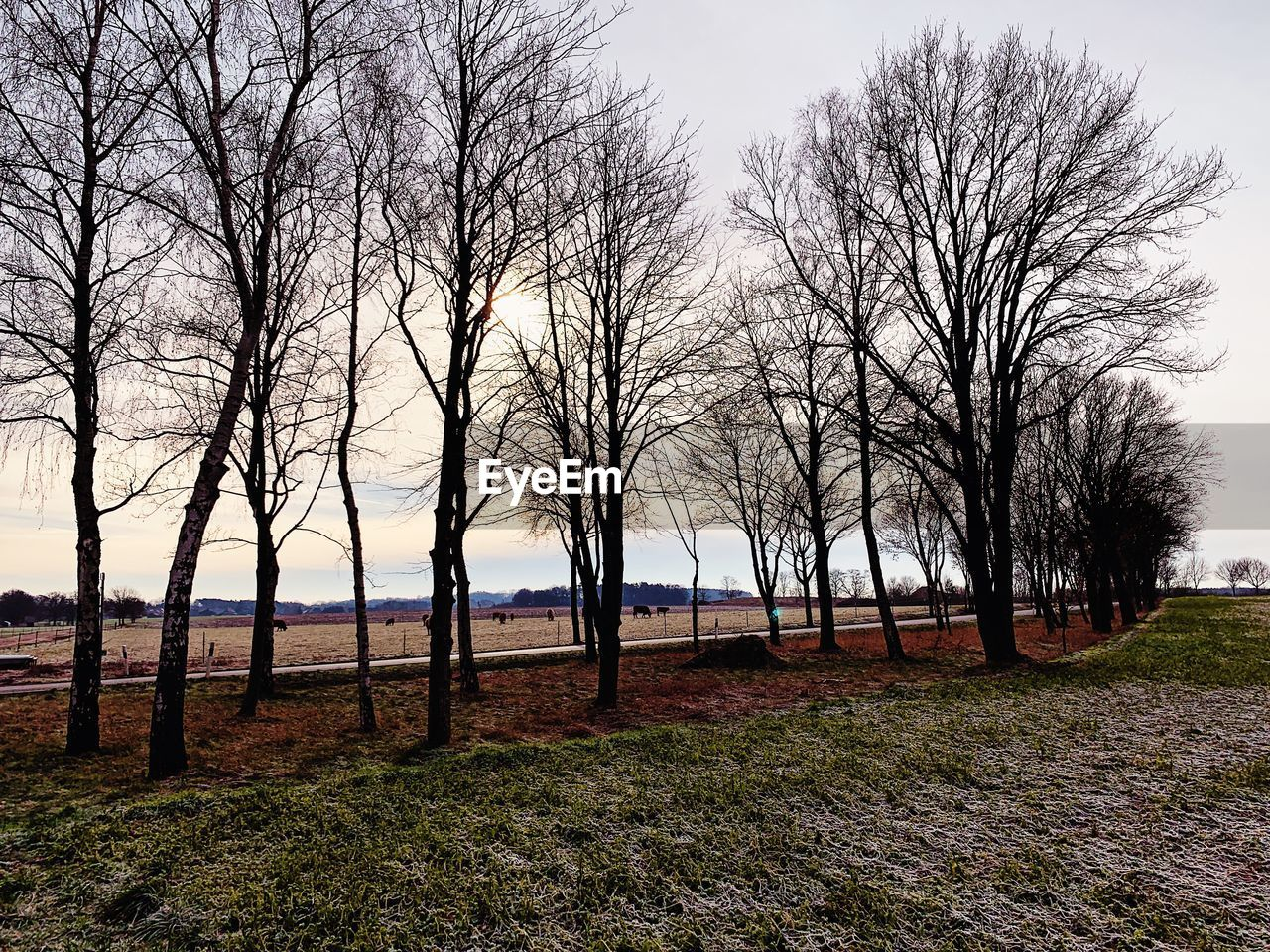 tree, bare tree, plant, sky, tranquility, land, scenics - nature, tranquil scene, landscape, no people, beauty in nature, nature, field, environment, branch, non-urban scene, day, grass, outdoors, clear sky