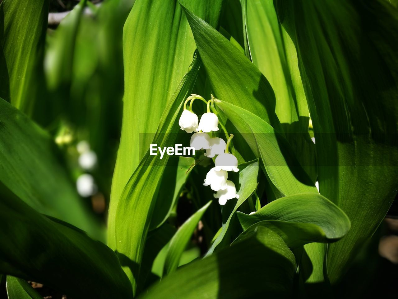 leaf, green color, growth, nature, plant, beauty in nature, no people, outdoors, day, freshness, flower, close-up, flower head