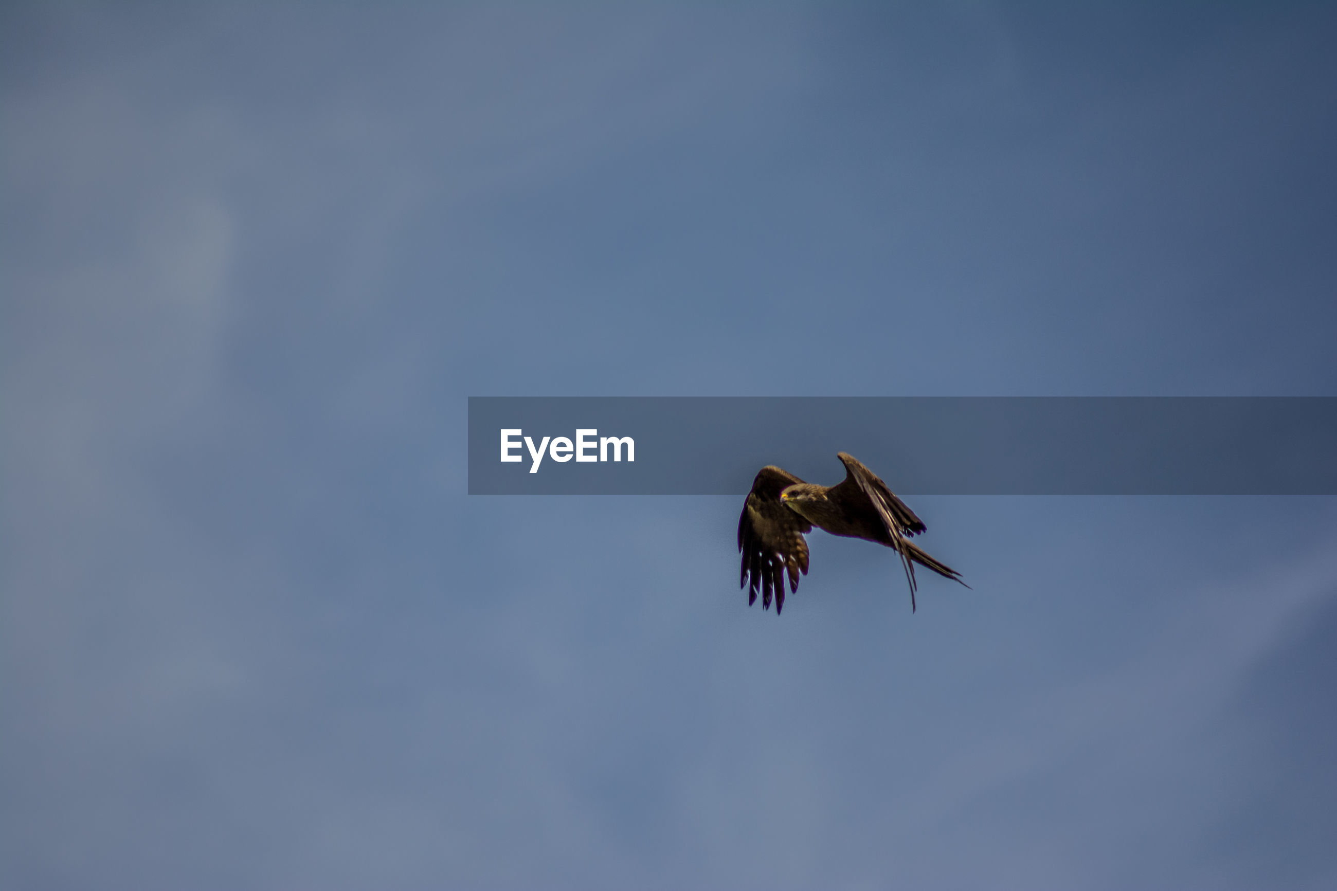 LOW ANGLE VIEW OF HAWK FLYING AGAINST SKY