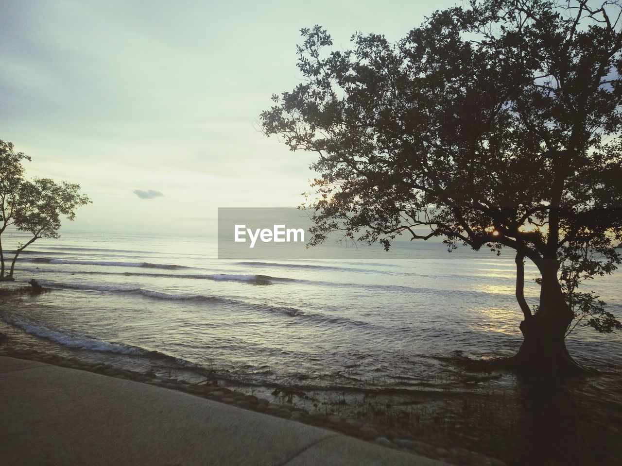 tree, sea, nature, beauty in nature, tranquility, water, tranquil scene, no people, scenics, sky, beach, sunset, outdoors, day