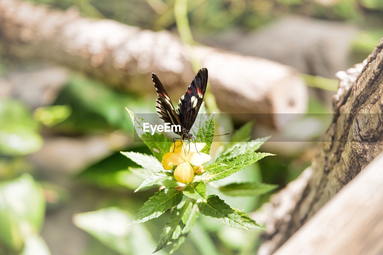 animals in the wild, flower, one animal, animal themes, nature, insect, fragility, growth, freshness, animal wildlife, petal, plant, beauty in nature, day, no people, outdoors, butterfly - insect, flower head, close-up, leaf, pollination