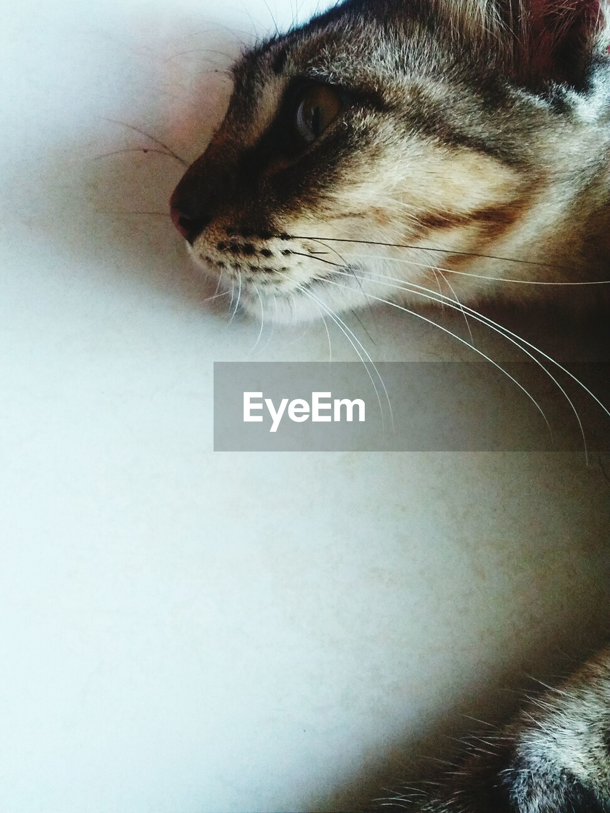 one animal, animal themes, pets, domestic animals, mammal, close-up, animal head, domestic cat, animal body part, indoors, cat, animal eye, whisker, dog, looking away, feline, alertness, no people, portrait, part of