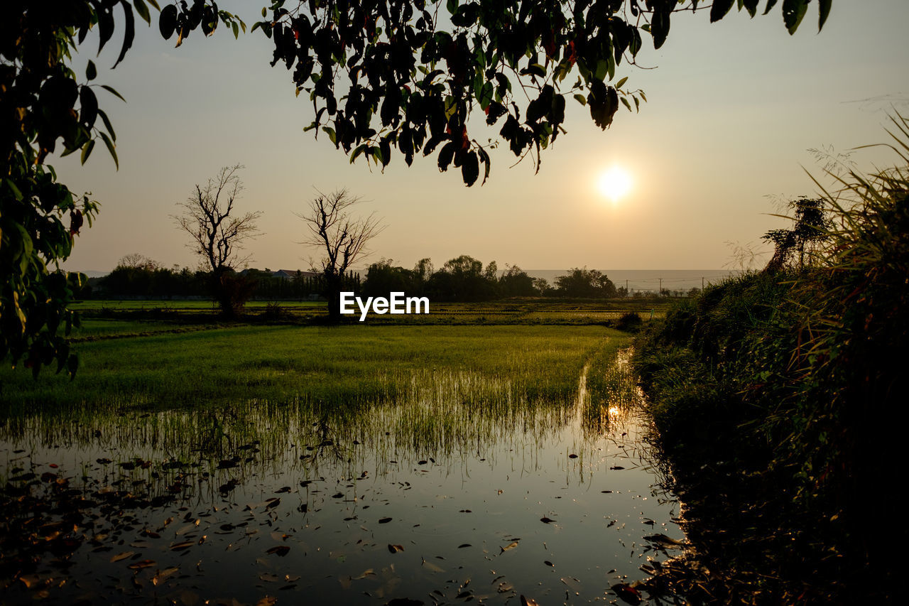 sky, plant, scenics - nature, tranquility, tranquil scene, tree, sunset, beauty in nature, water, nature, reflection, landscape, no people, field, environment, growth, land, sun, rural scene, outdoors