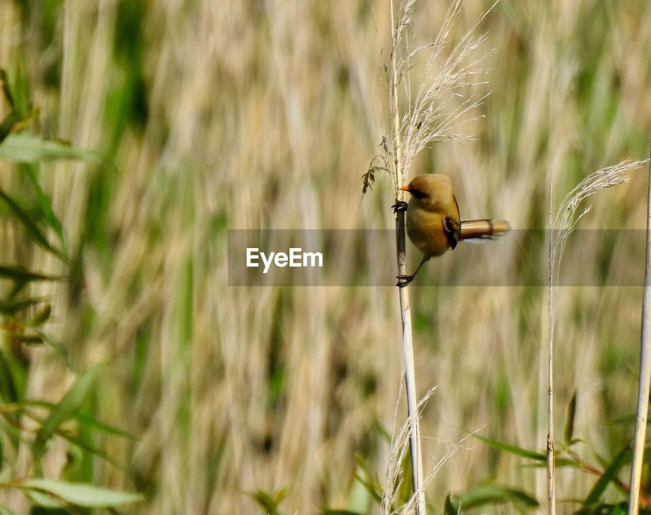 plant, animals in the wild, one animal, animal themes, animal, animal wildlife, bird, nature, day, vertebrate, field, no people, selective focus, land, growth, grass, close-up, focus on foreground, outdoors, beauty in nature