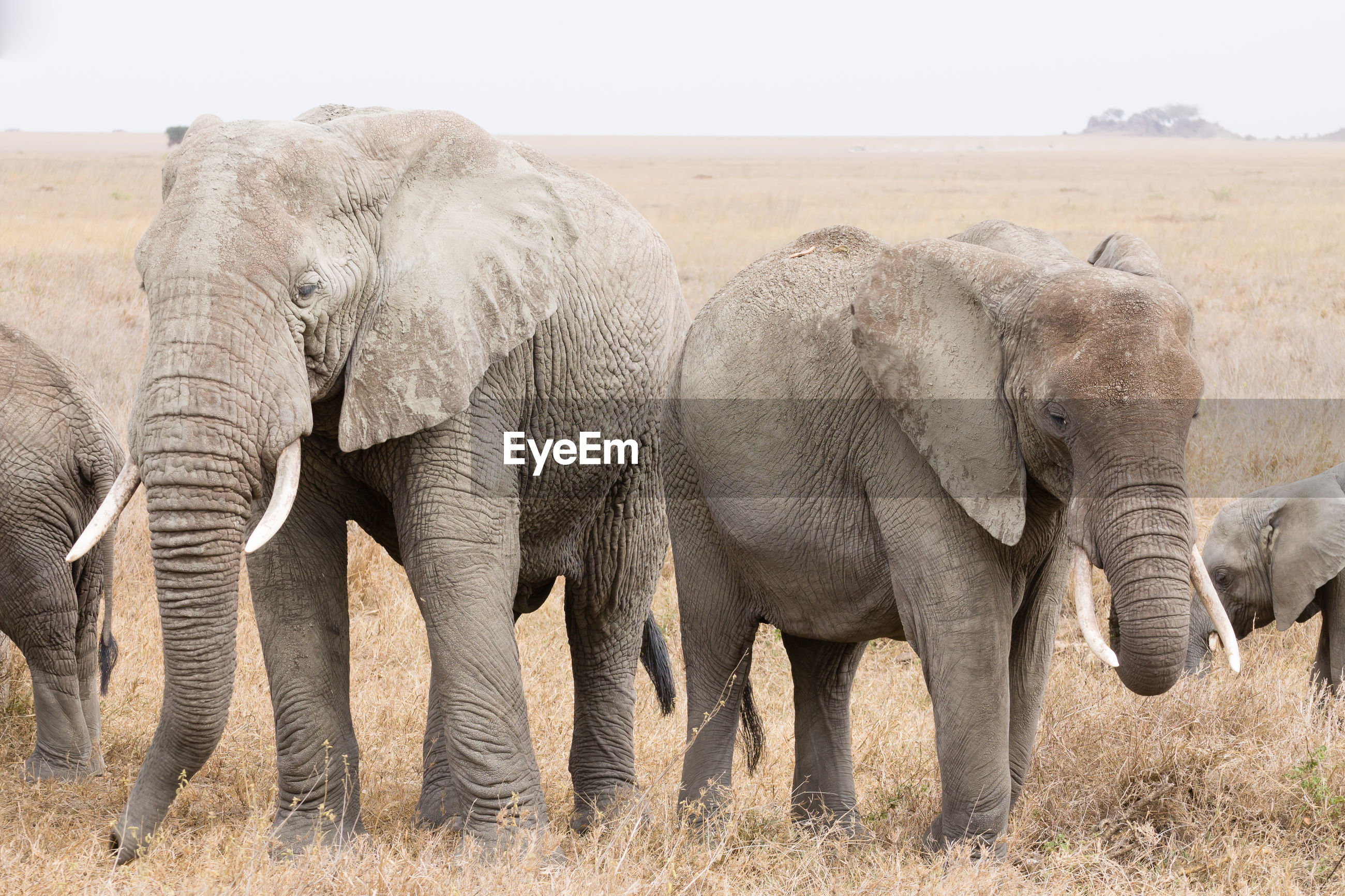 VIEW OF ELEPHANT IN THE FIELD