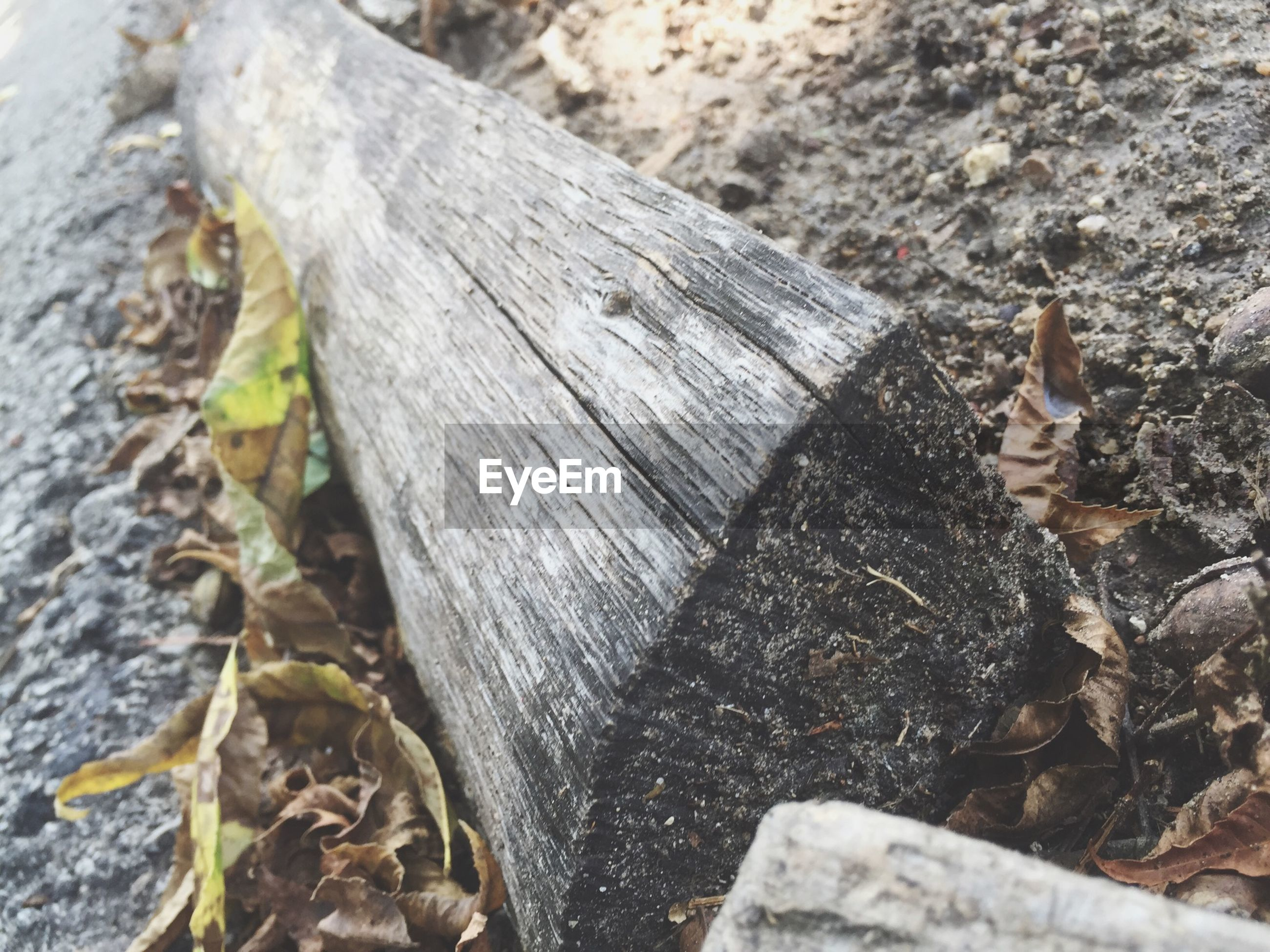 wood - material, leaf, close-up, nature, high angle view, dry, growth, day, plant, outdoors, focus on foreground, textured, no people, tree trunk, selective focus, wood, field, fallen, ground, sunlight