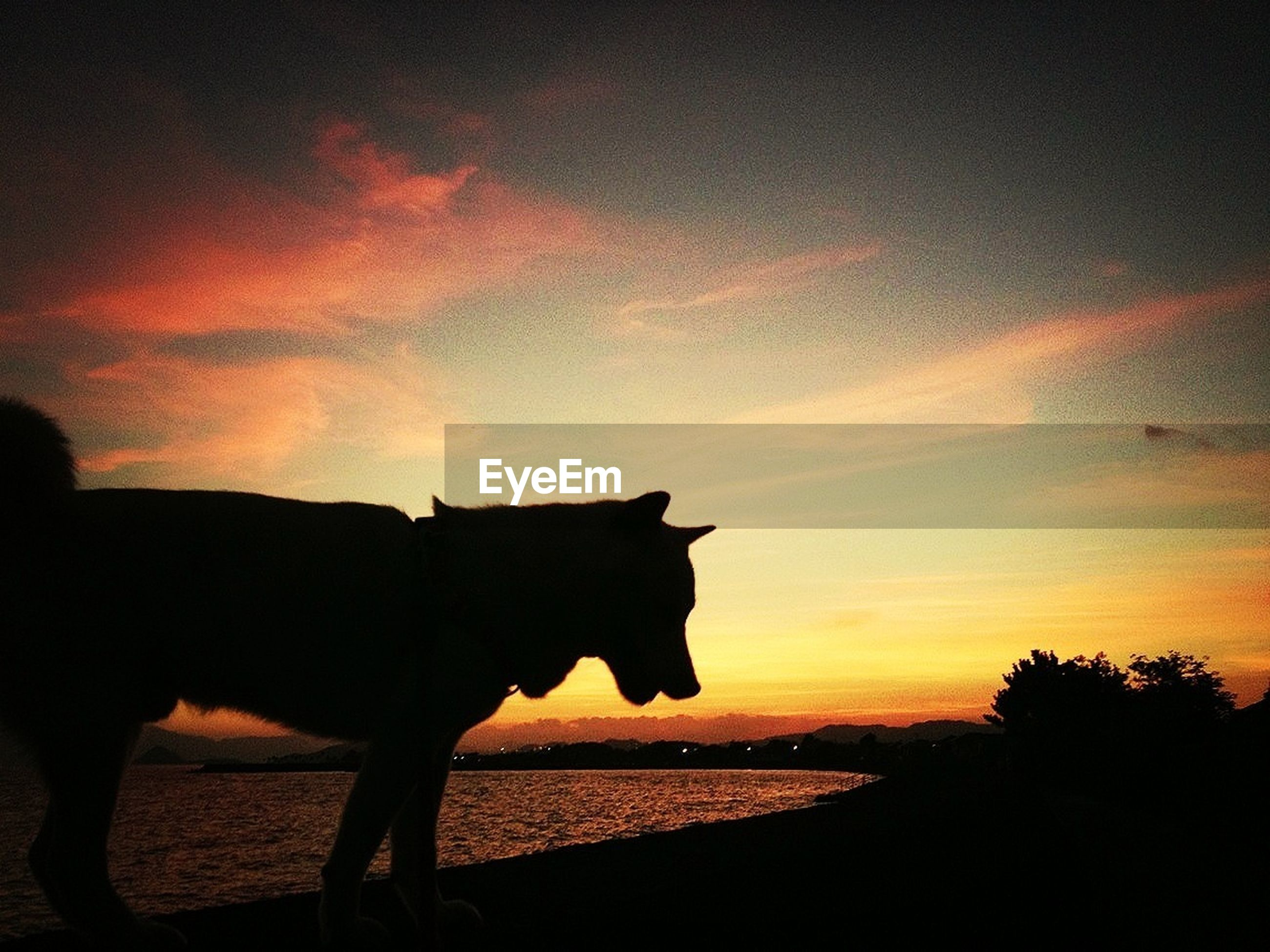 domestic animals, mammal, sunset, animal themes, one animal, silhouette, sky, horse, pets, cloud - sky, orange color, working animal, standing, cloud, livestock, nature, side view, dog, field, outdoors