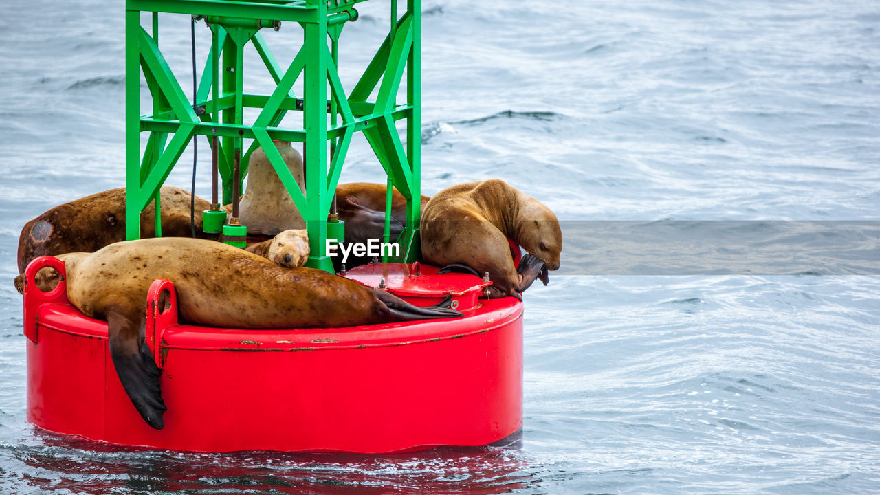 mammal, water, animal, animal themes, one animal, dog, pets, canine, domestic, domestic animals, vertebrate, no people, nature, container, relaxation, day, sea, red
