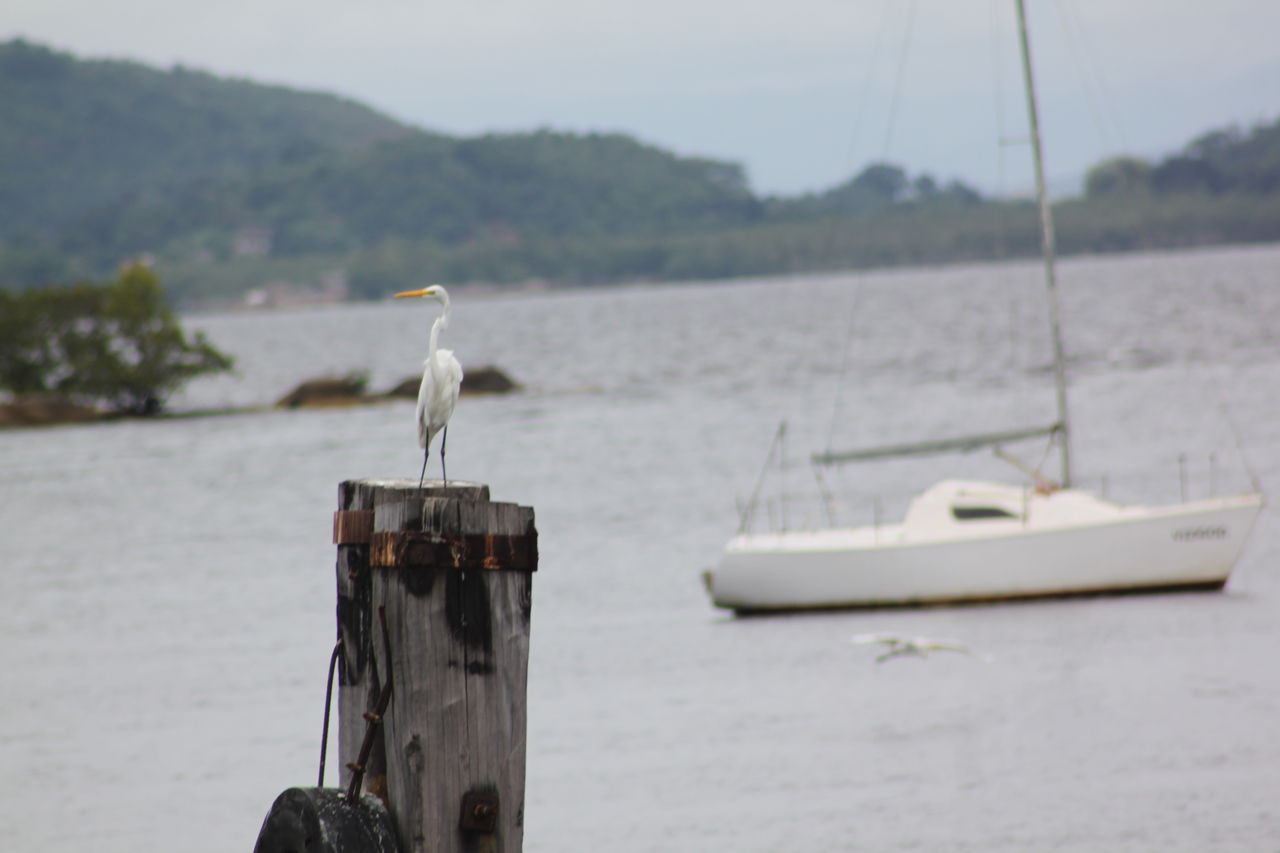 one animal, bird, animal themes, animals in the wild, animal wildlife, nature, water, perching, no people, outdoors, focus on foreground, day, sea, beauty in nature, wooden post, great egret, nautical vessel, gray heron, close-up, sky