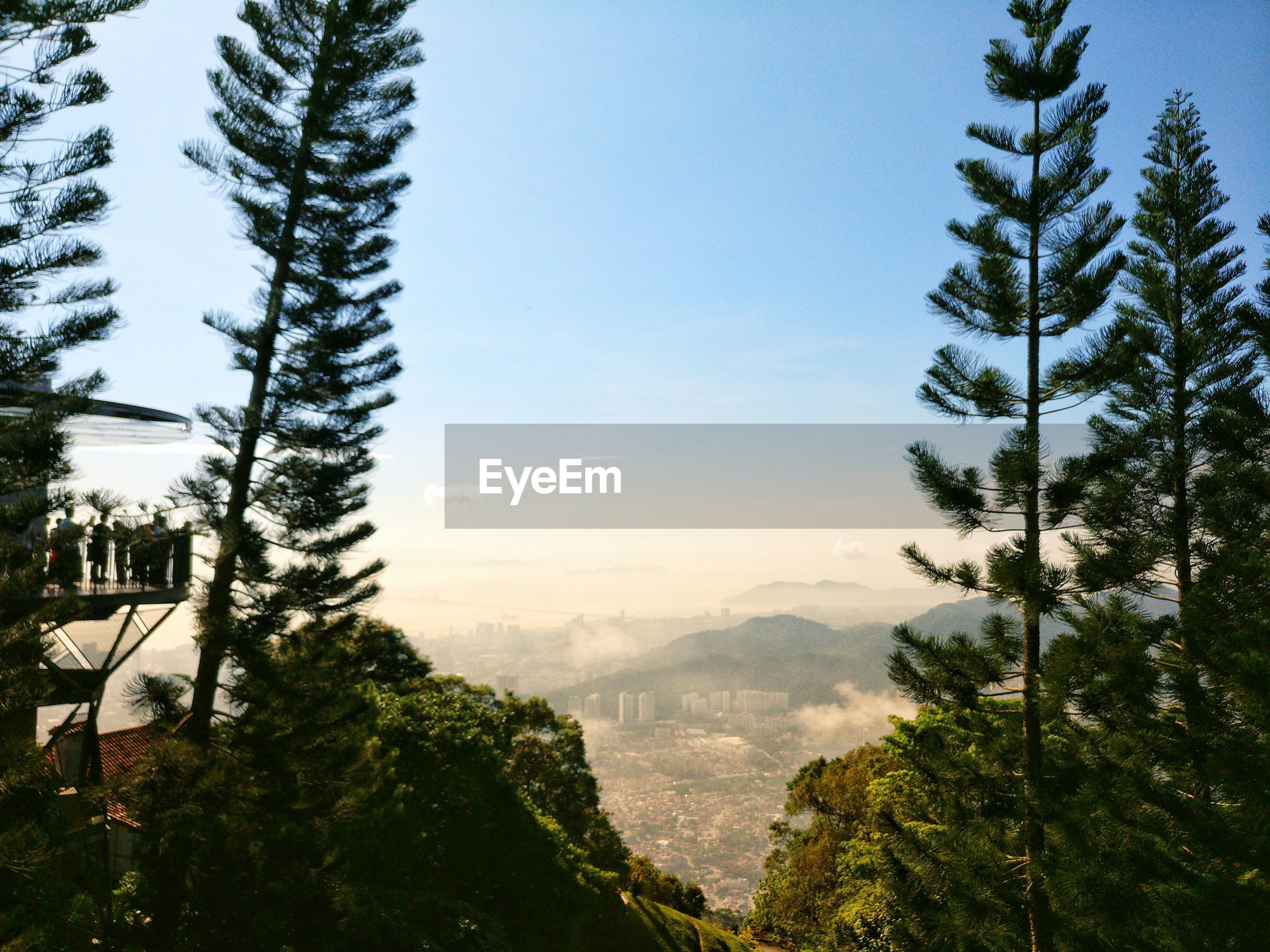 PINE TREES ON MOUNTAIN AGAINST SKY