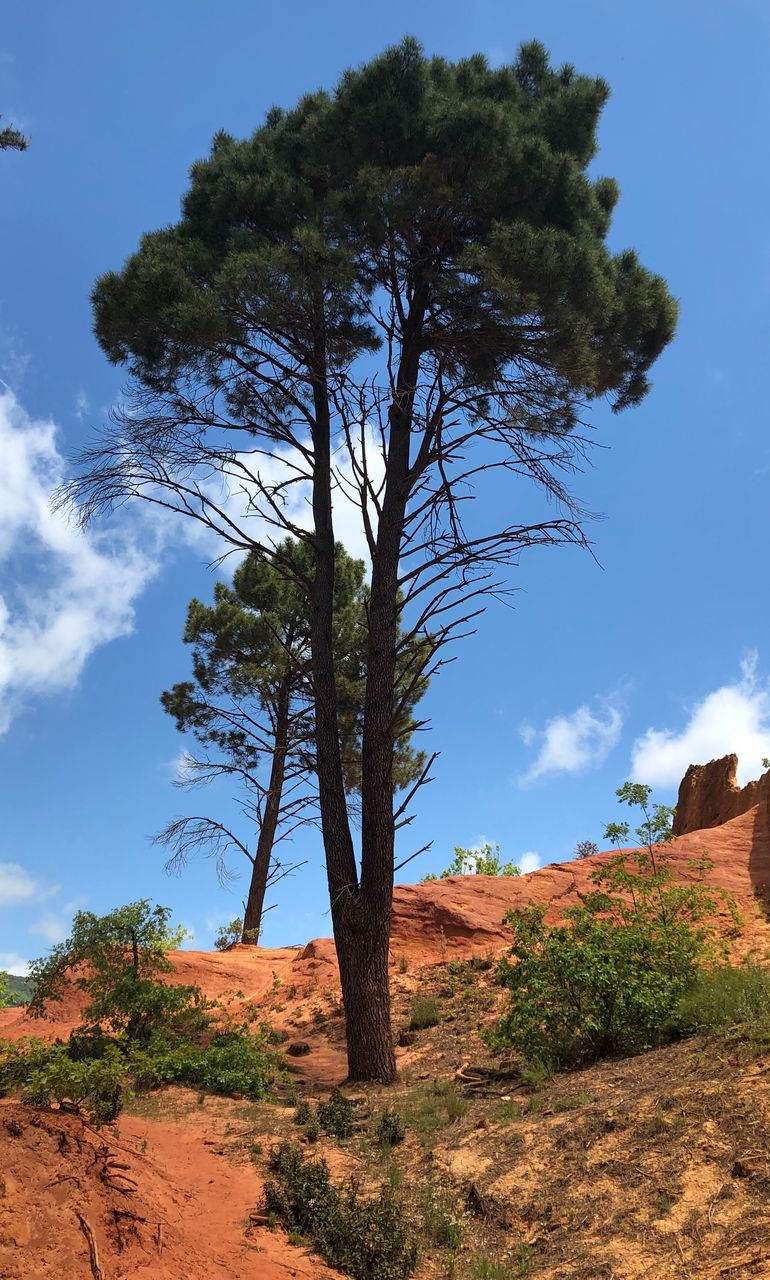 plant, tree, sky, growth, nature, beauty in nature, no people, tranquil scene, tranquility, environment, land, non-urban scene, landscape, day, scenics - nature, sunlight, cloud - sky, low angle view, outdoors, rock, arid climate