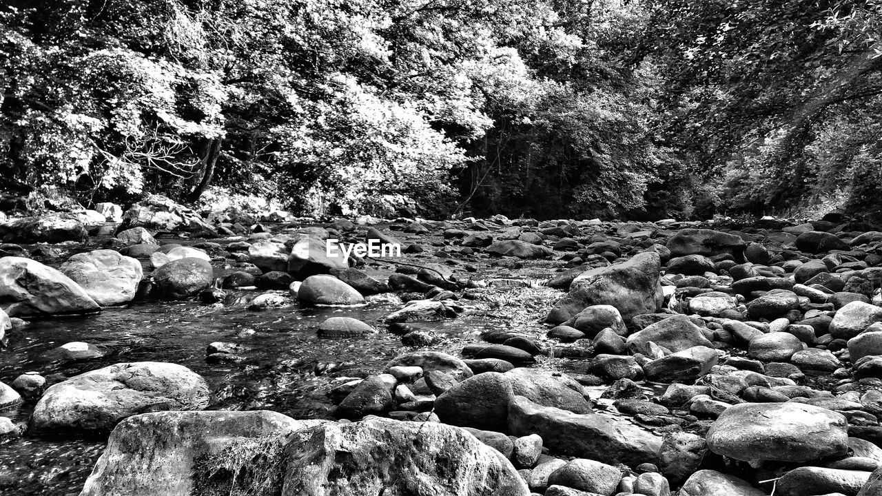 rock, solid, rock - object, tree, day, stone, nature, no people, stone - object, land, beauty in nature, plant, tranquility, pebble, water, forest, non-urban scene, tranquil scene, scenics - nature, outdoors, flowing water, flowing, surface level
