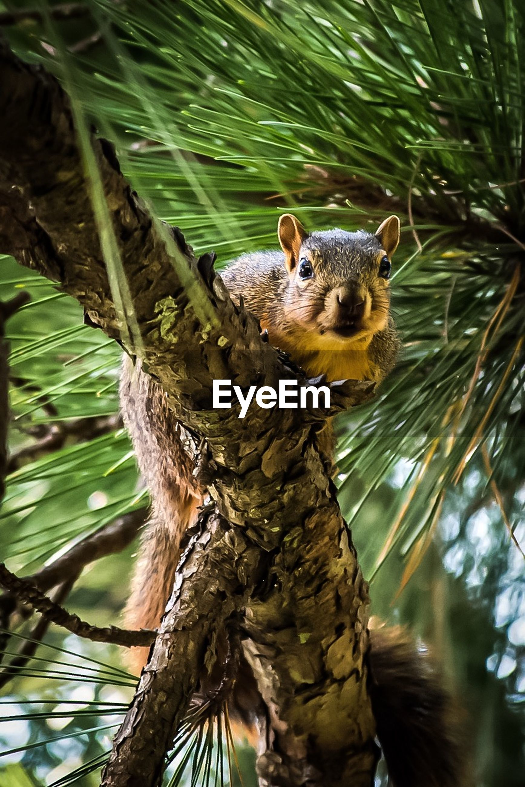 Low angle portrait of squirrel on branch