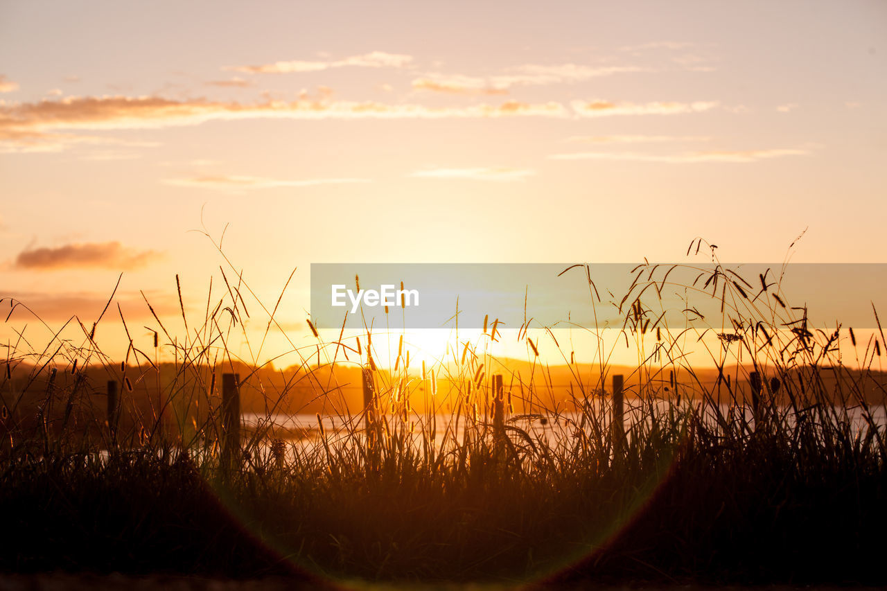 nature, tranquil scene, tranquility, growth, beauty in nature, scenics, sunset, outdoors, no people, plant, water, sky, grass, day, close-up