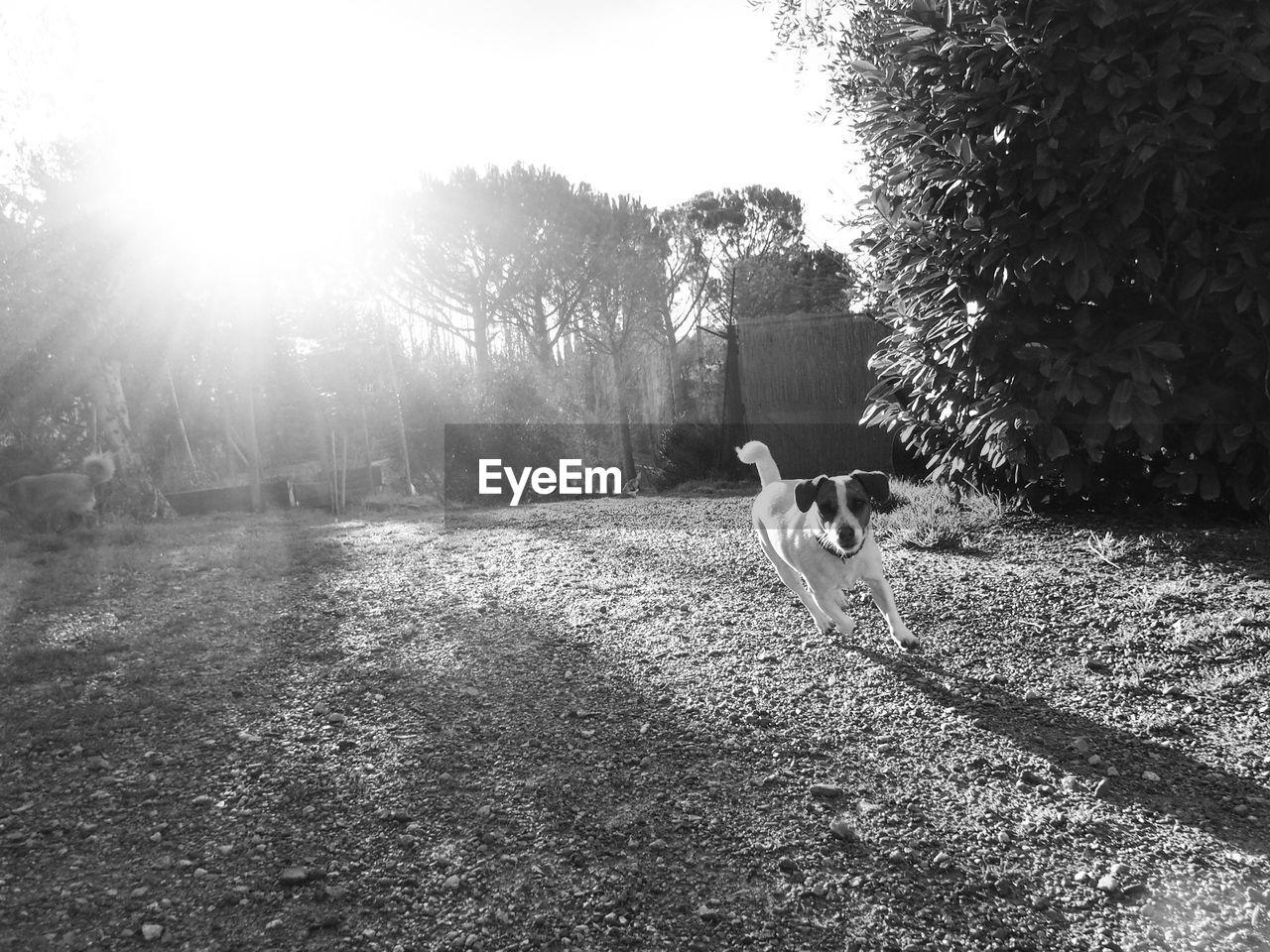 DOG STANDING ON LANDSCAPE