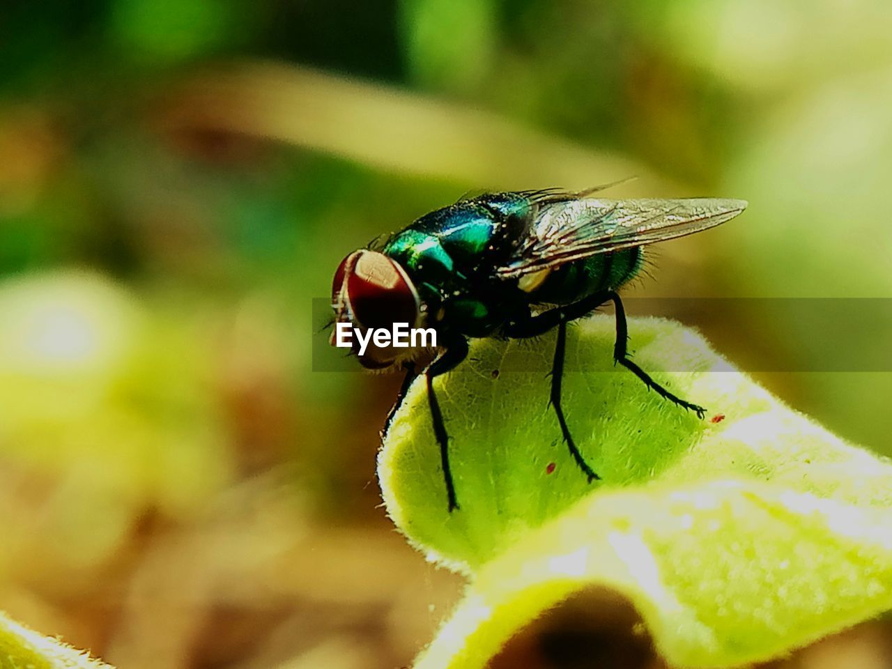 insect, invertebrate, animals in the wild, animal wildlife, animal themes, animal, one animal, close-up, selective focus, animal wing, plant, fly, green color, plant part, leaf, nature, beauty in nature, day, flower, flowering plant, no people, outdoors, flower head, animal eye, pollination