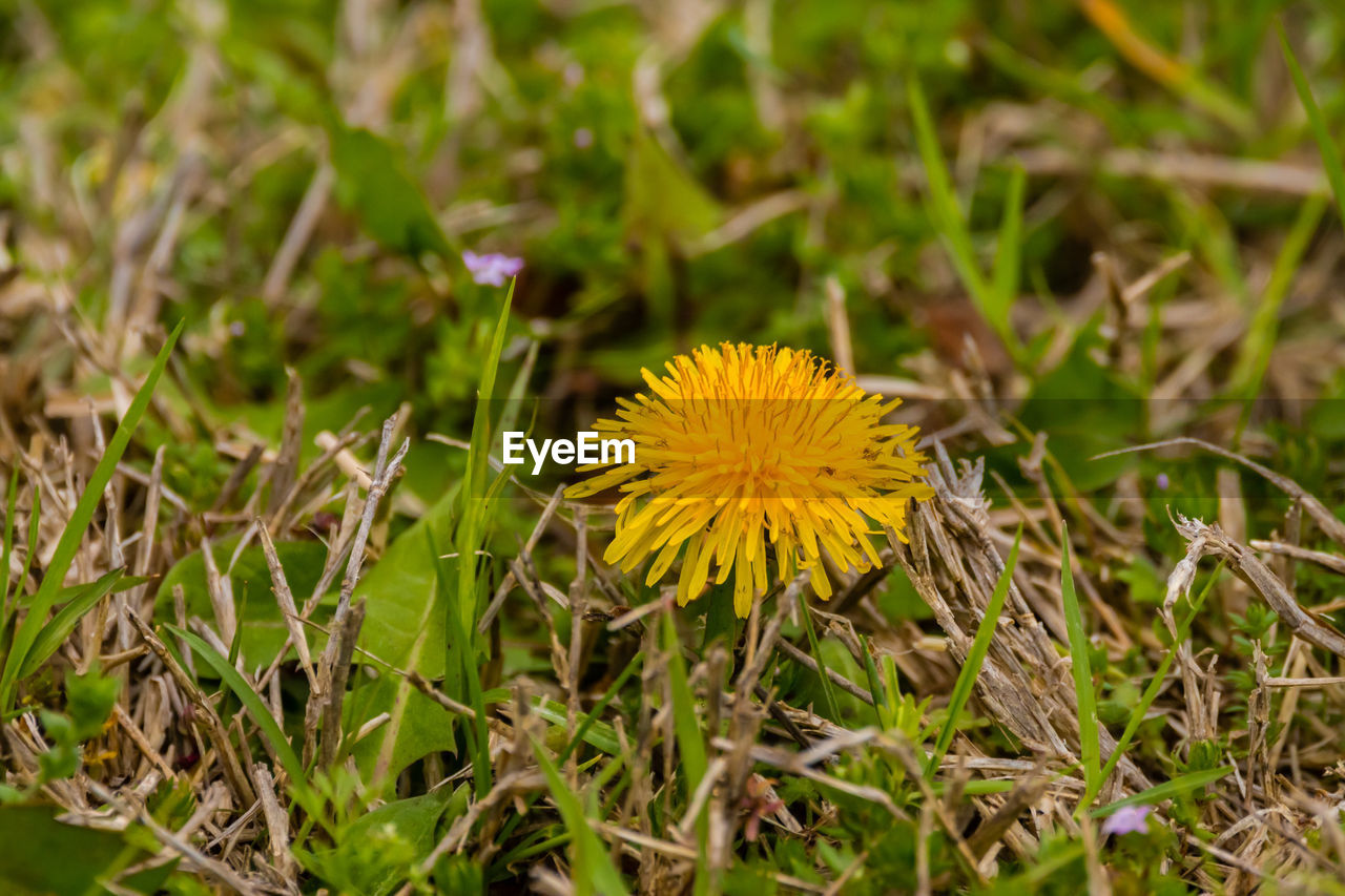 flower, growth, nature, fragility, yellow, plant, flower head, petal, beauty in nature, field, blooming, outdoors, no people, freshness, close-up, day
