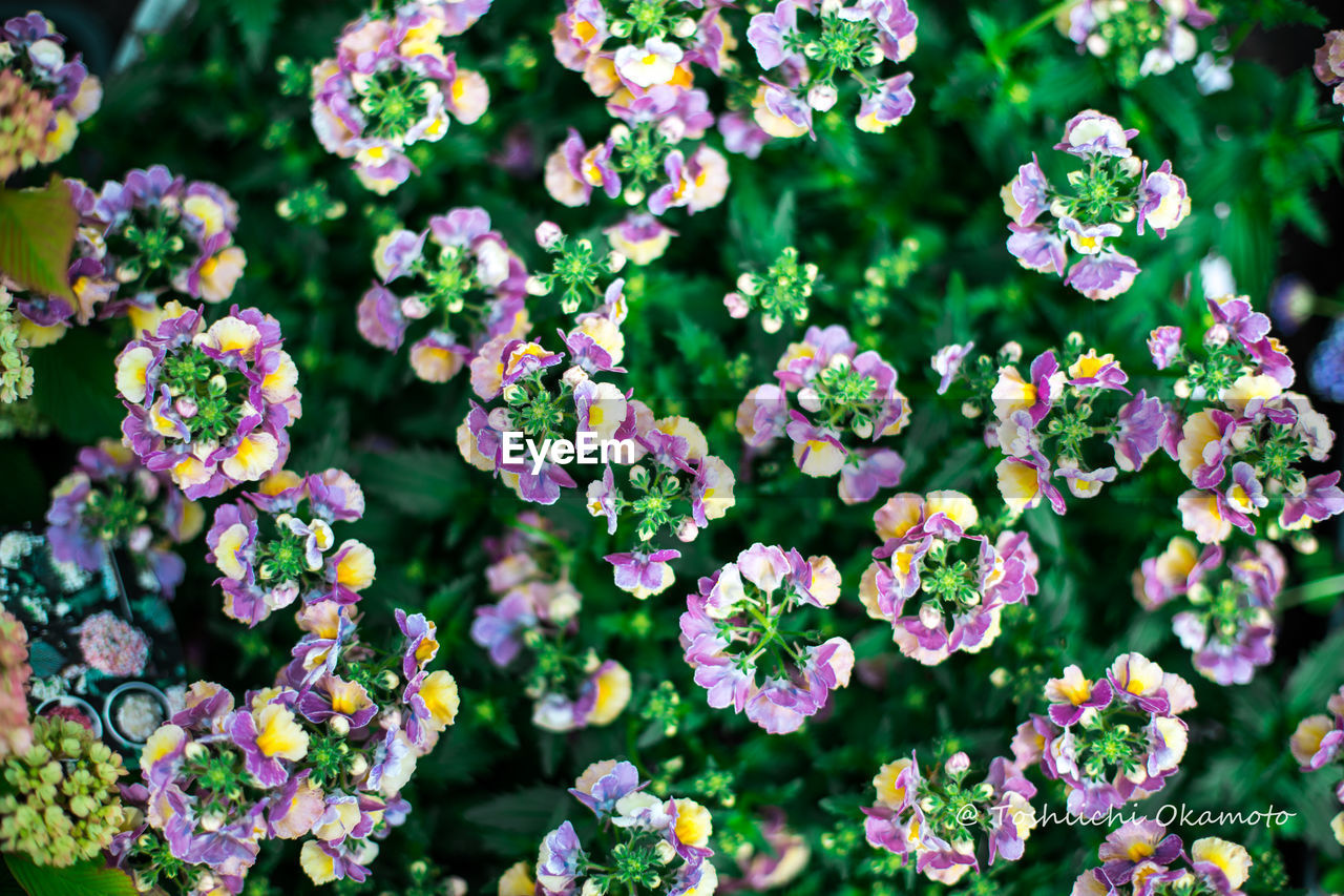 flower, plant, nature, beauty in nature, growth, fragility, no people, day, freshness, outdoors, green color, leaf, blooming, flower head, close-up