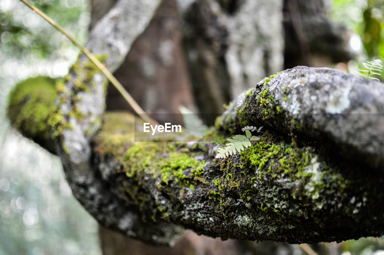 moss, rock, plant, rock - object, focus on foreground, day, no people, solid, close-up, growth, tree, nature, selective focus, outdoors, textured, rough, green color, lichen, beauty in nature, tranquility