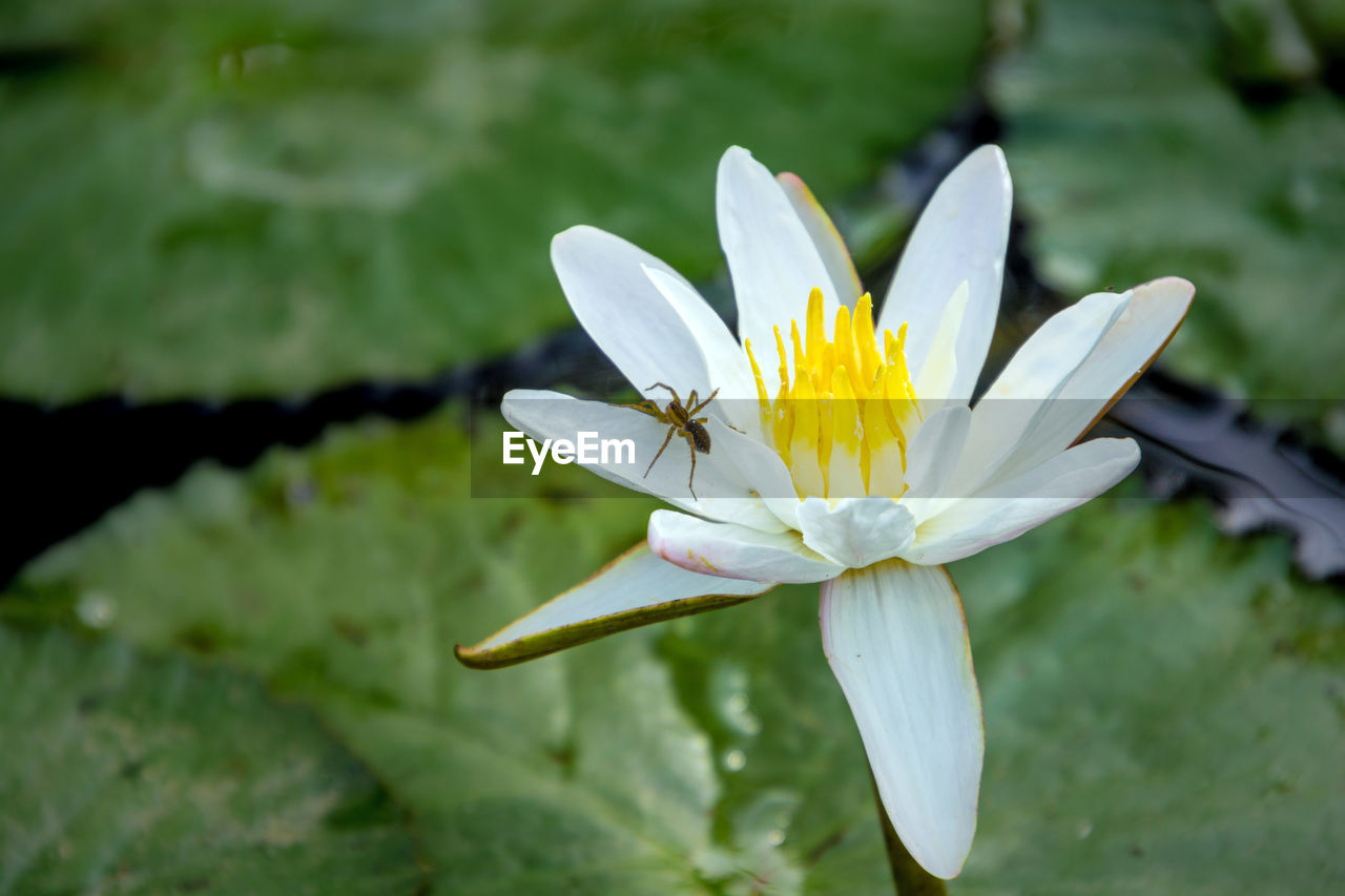 flowering plant, flower, fragility, vulnerability, plant, beauty in nature, growth, freshness, petal, flower head, inflorescence, close-up, nature, day, white color, yellow, focus on foreground, pollen, leaf, no people, outdoors, pollination