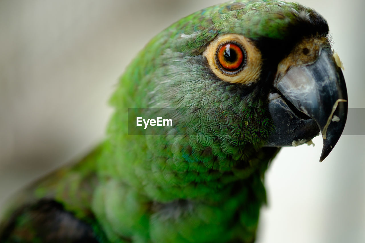 bird, one animal, animal themes, animals in the wild, close-up, animal wildlife, beak, parrot, focus on foreground, green color, no people, day, nature, outdoors