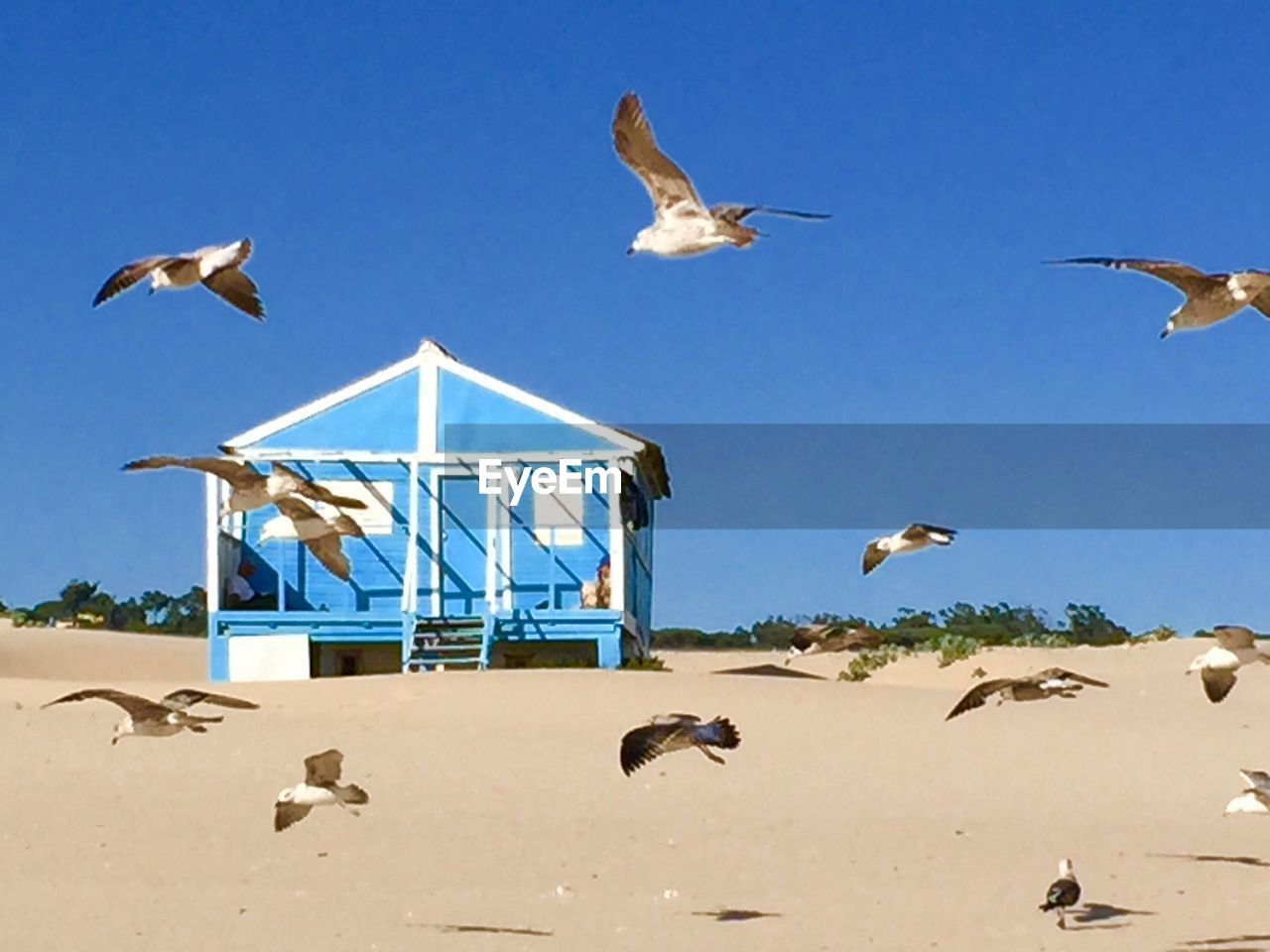 animal themes, sand, beach, flying, animals in the wild, nature, day, bird, outdoors, clear sky, mid-air, seagull, spread wings, sunlight, no people, animal wildlife, large group of animals, blue, sky, scenics, sea, beauty in nature, mammal