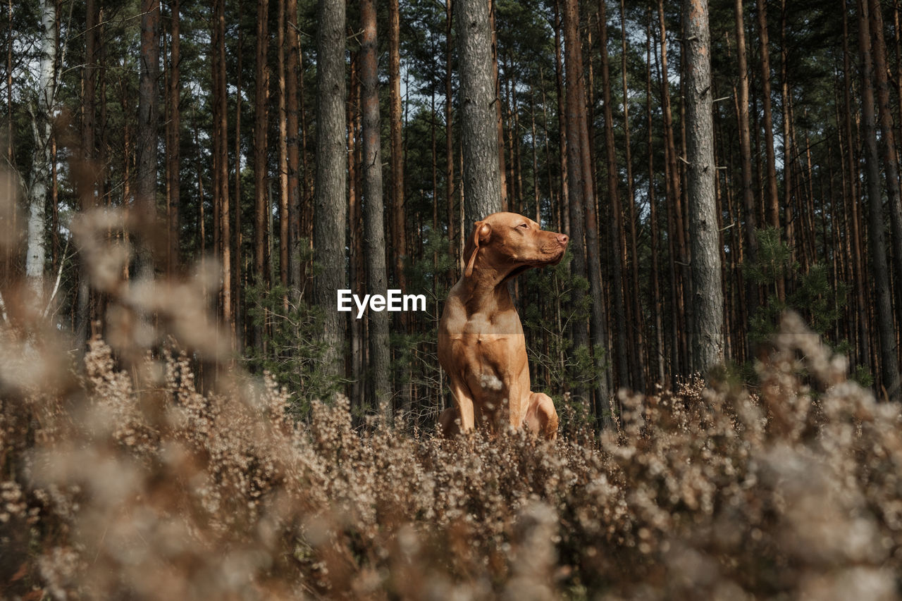 Low angle view of dog sitting on plants in forest