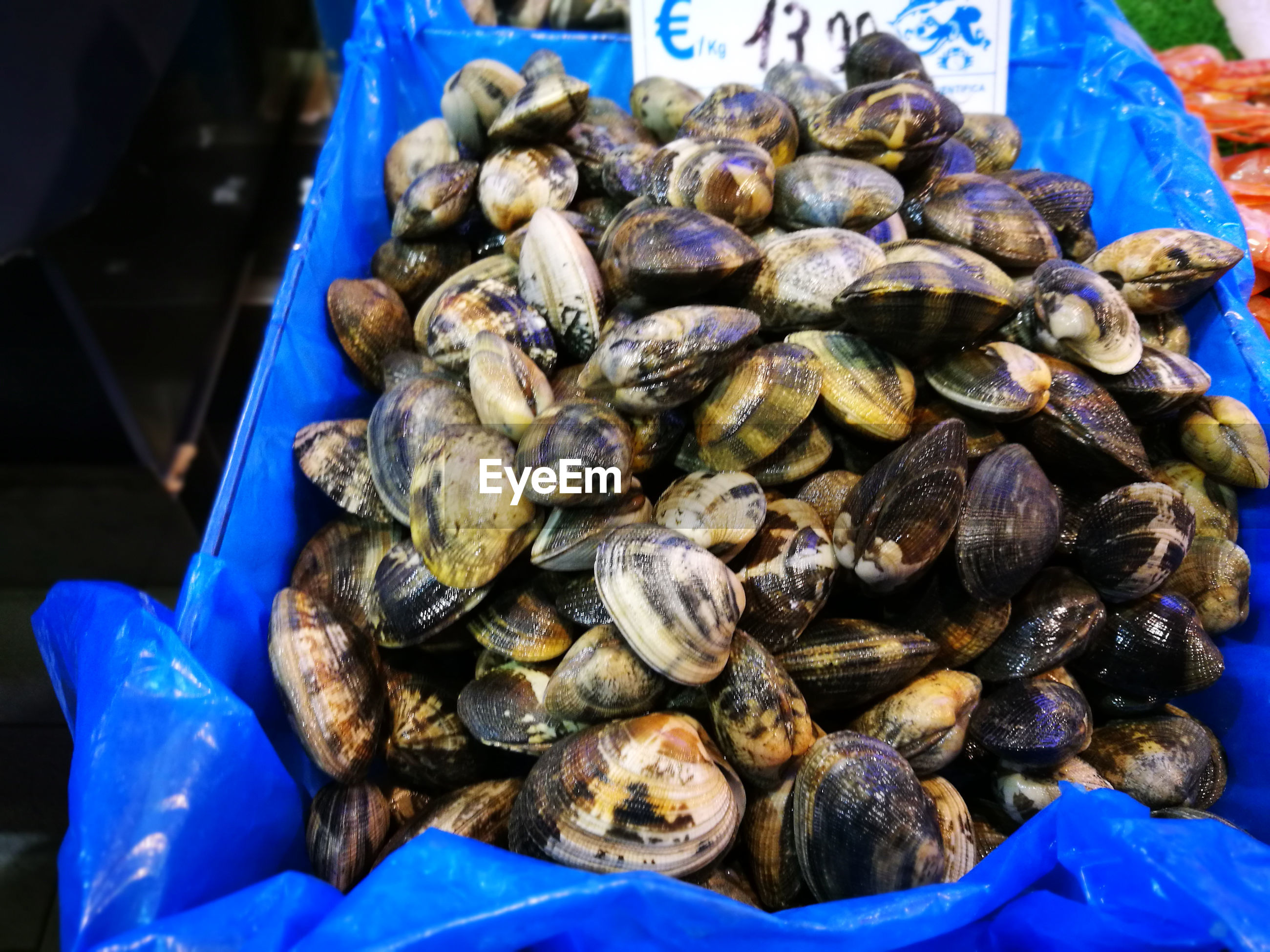 Close-up of clams for sale in market