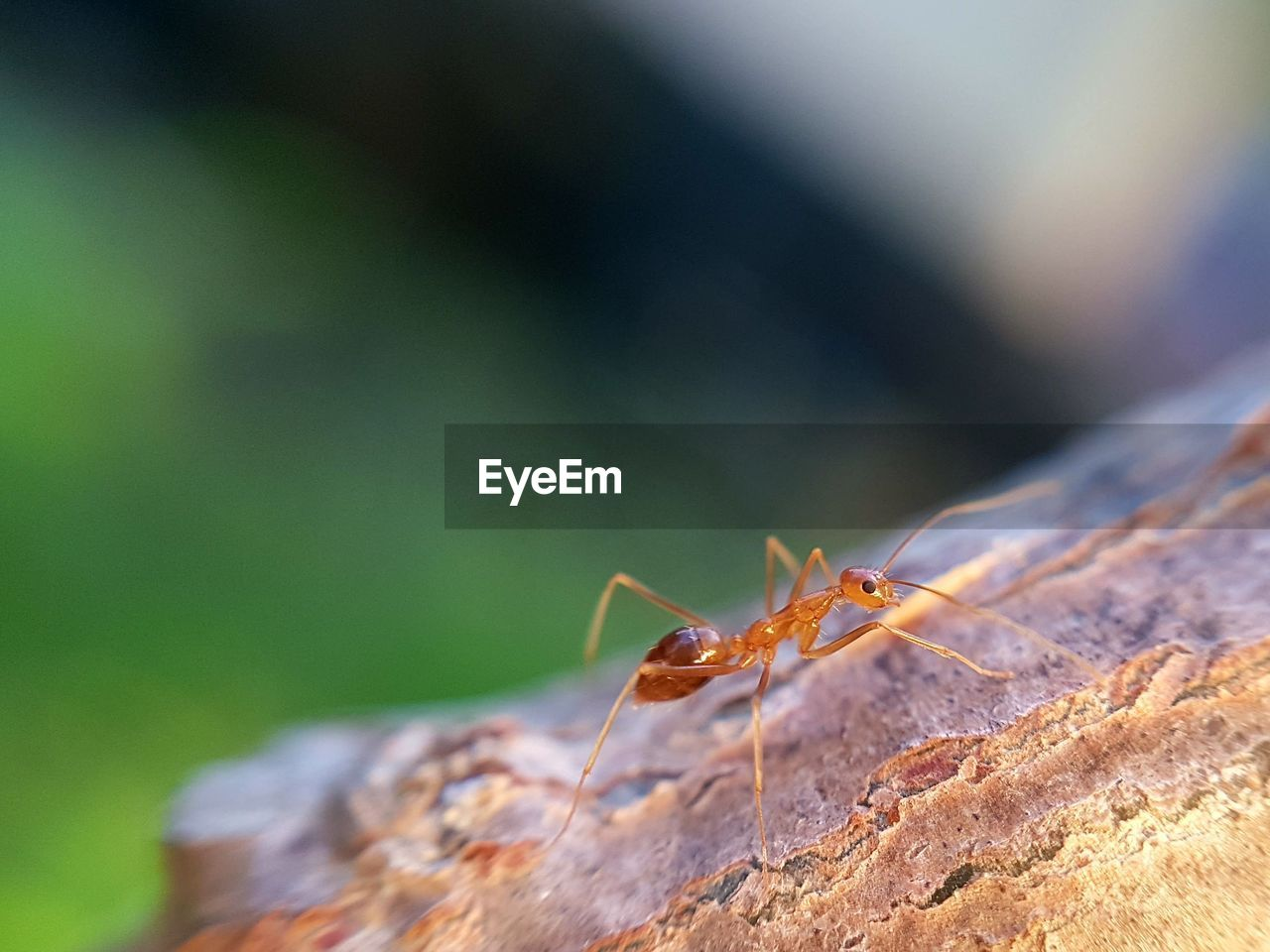 animal themes, animal wildlife, animals in the wild, animal, invertebrate, one animal, insect, close-up, selective focus, no people, day, nature, focus on foreground, animal body part, outdoors, arthropod, zoology, solid, plant part, leaf