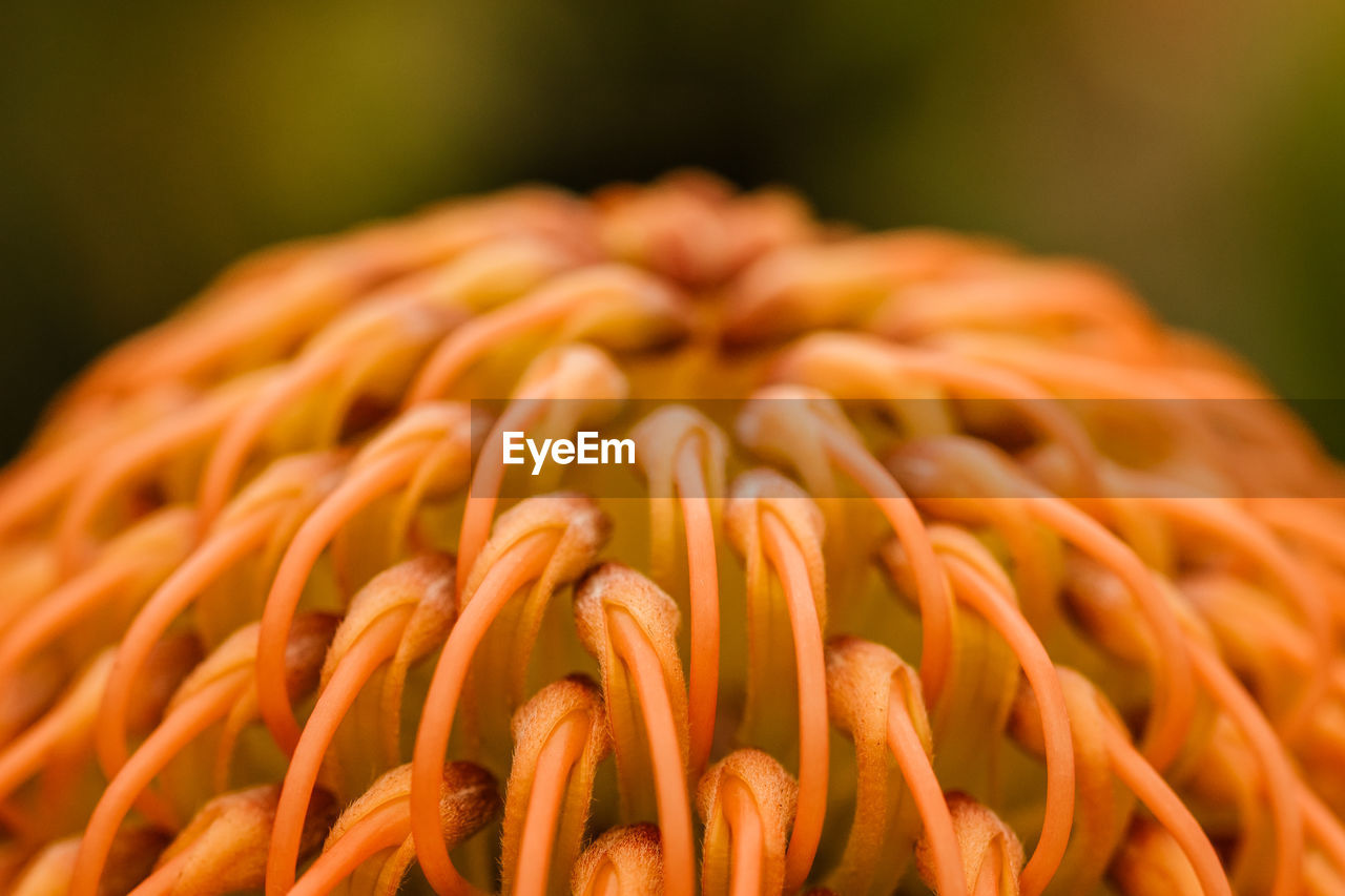 close-up, no people, freshness, focus on foreground, orange color, beauty in nature, growth, selective focus, food, plant, nature, food and drink, brown, flower, day, fragility, flower head, vulnerability, still life, flowering plant