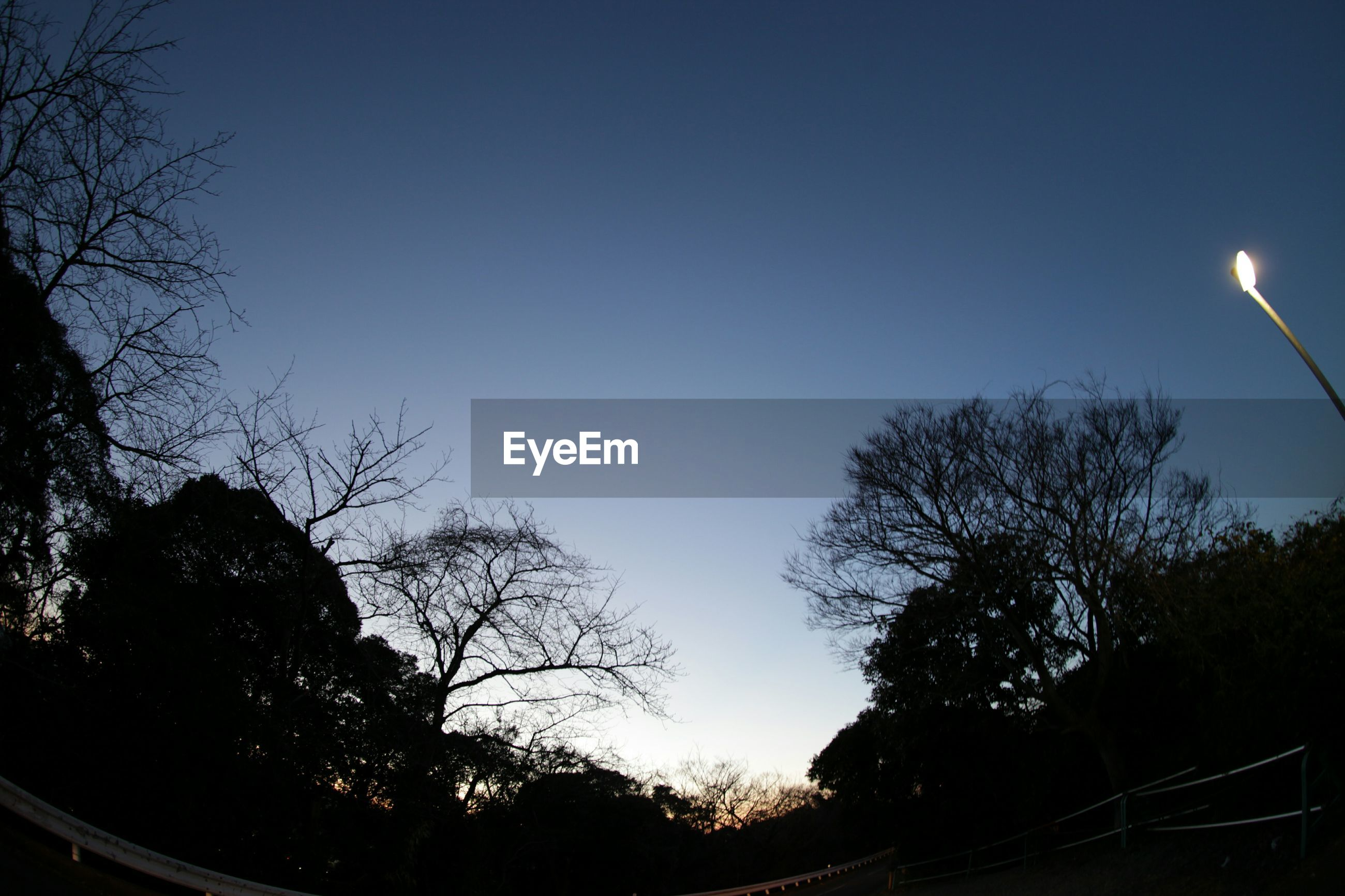 Silhouette Of Trees During Dusk Against Blue Sky