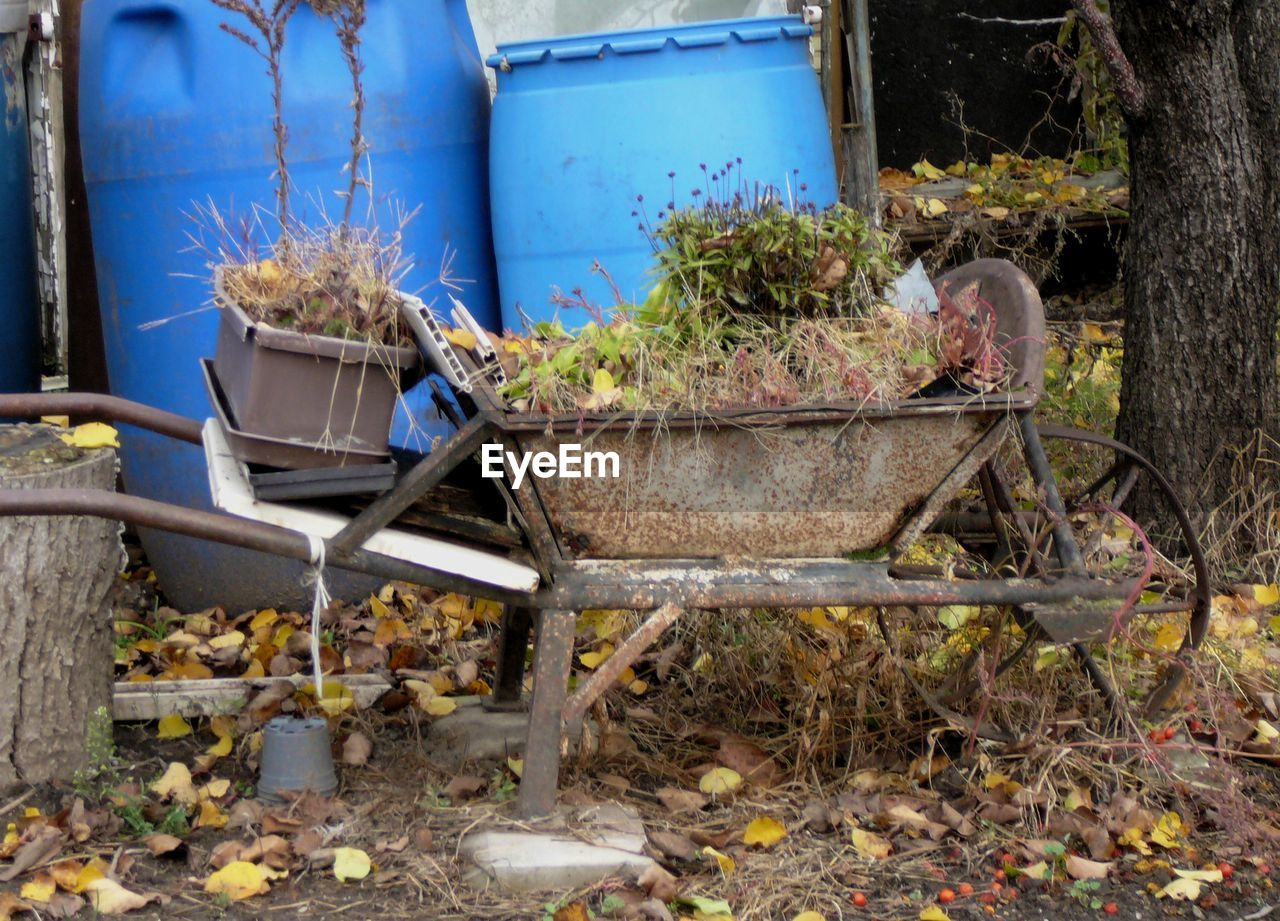 plant, nature, day, no people, outdoors, abandoned, potted plant, front or back yard, chair, seat, container, growth, dirt, wood - material, transportation, can, watering can, obsolete, land, plant part, gardening