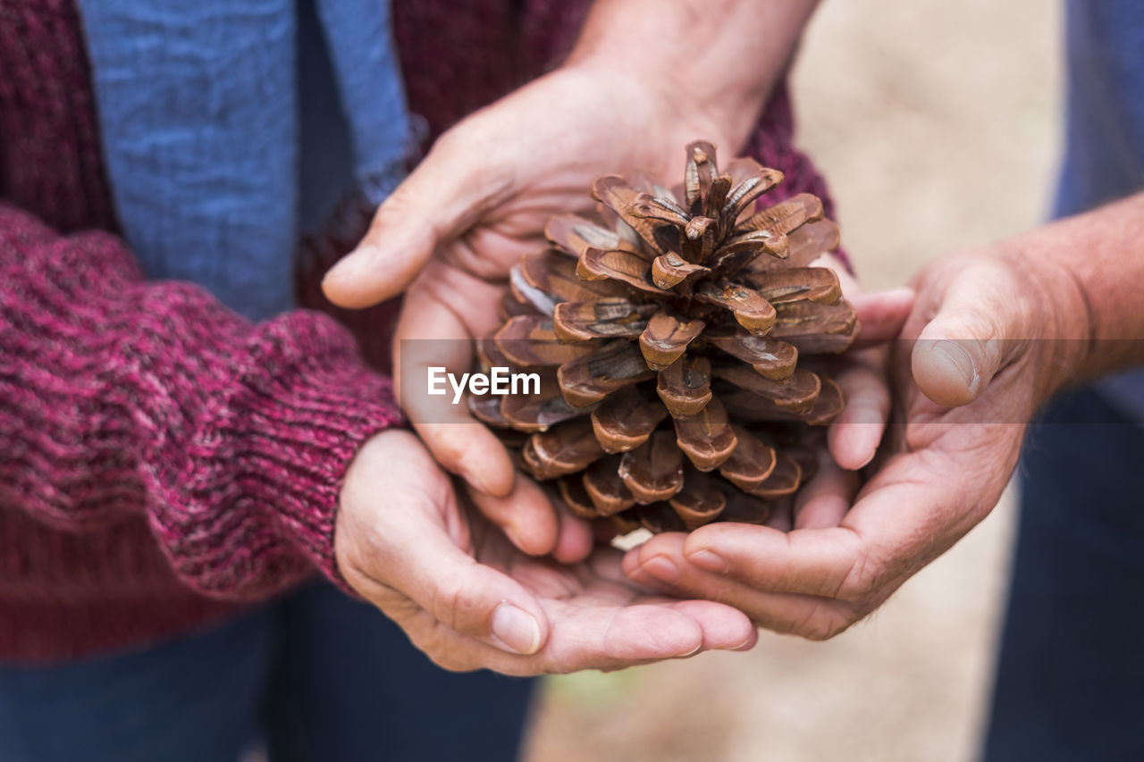 Midsection of people holding pine cone