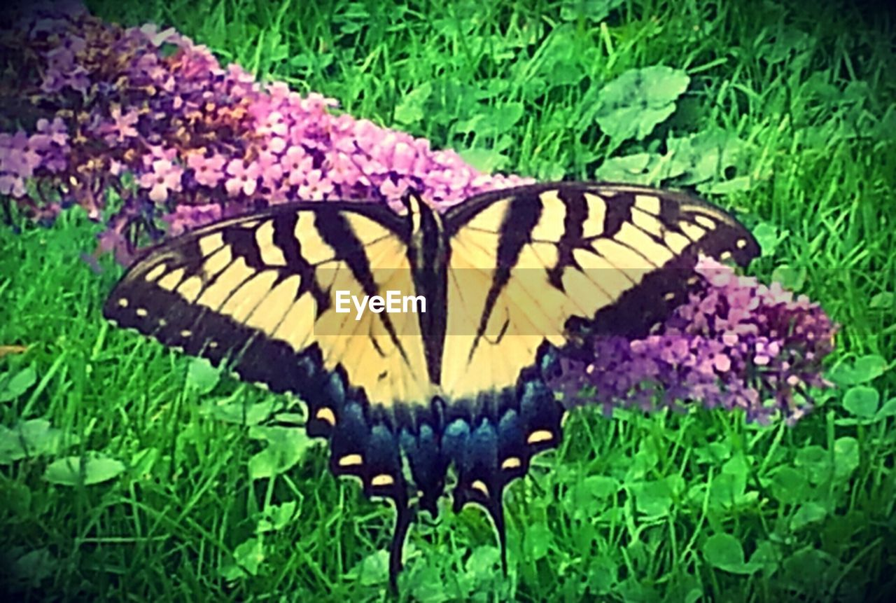 butterfly - insect, insect, butterfly, nature, flower, green color, animals in the wild, plant, beauty in nature, fragility, growth, animal themes, no people, freshness, outdoors, grass, animal markings, spread wings, close-up, day, flower head