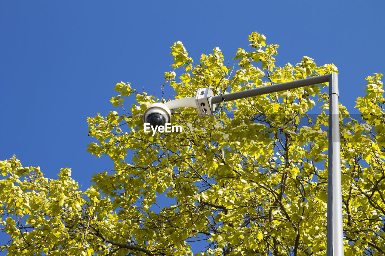 plant, low angle view, sky, yellow, nature, blue, clear sky, growth, day, no people, flowering plant, sunlight, flower, tree, outdoors, beauty in nature, freshness, lighting equipment, fragility, vulnerability
