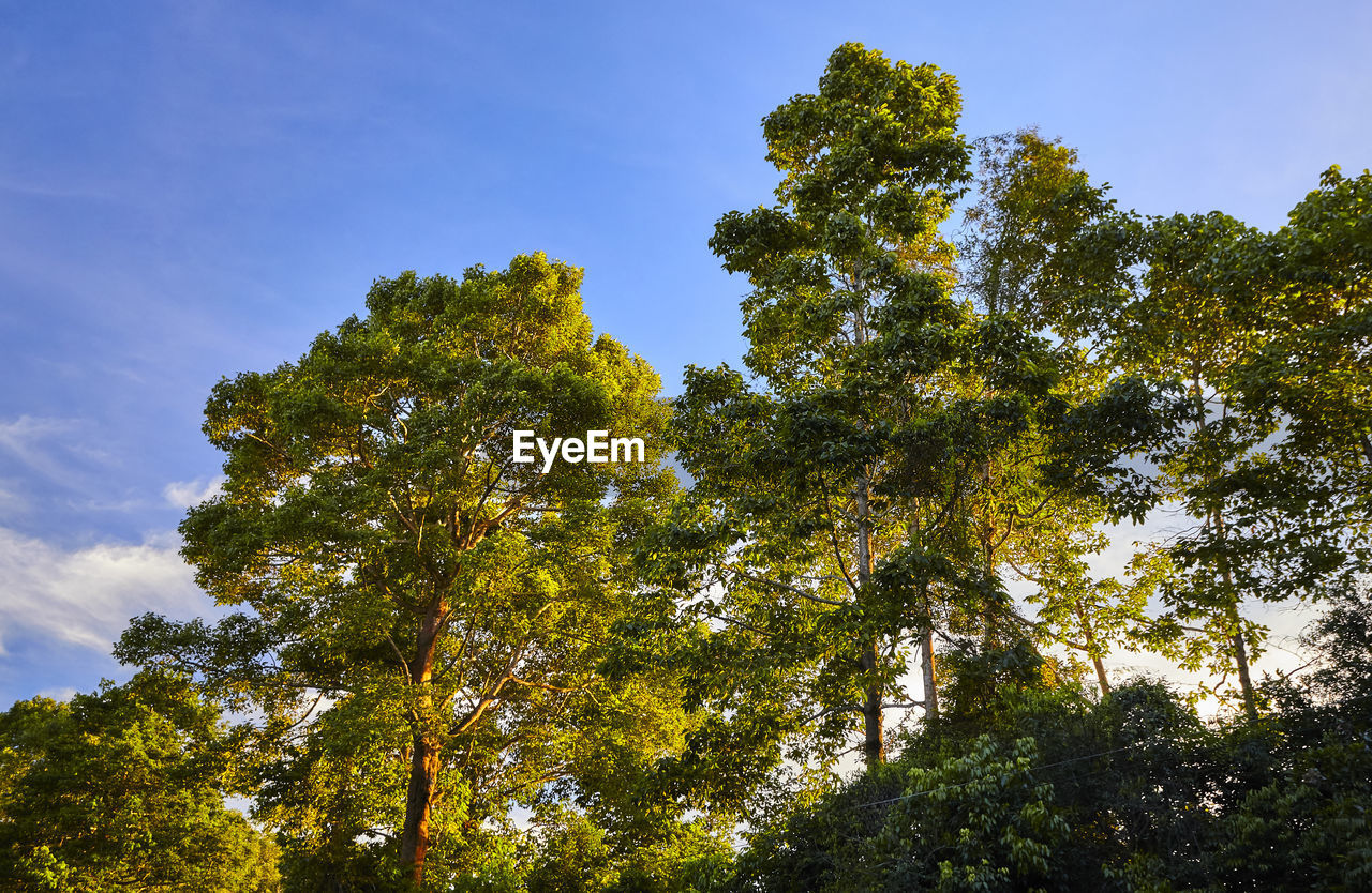 tree, low angle view, growth, nature, tranquility, no people, beauty in nature, day, sky, scenics, green color, outdoors, forest, branch, clear sky