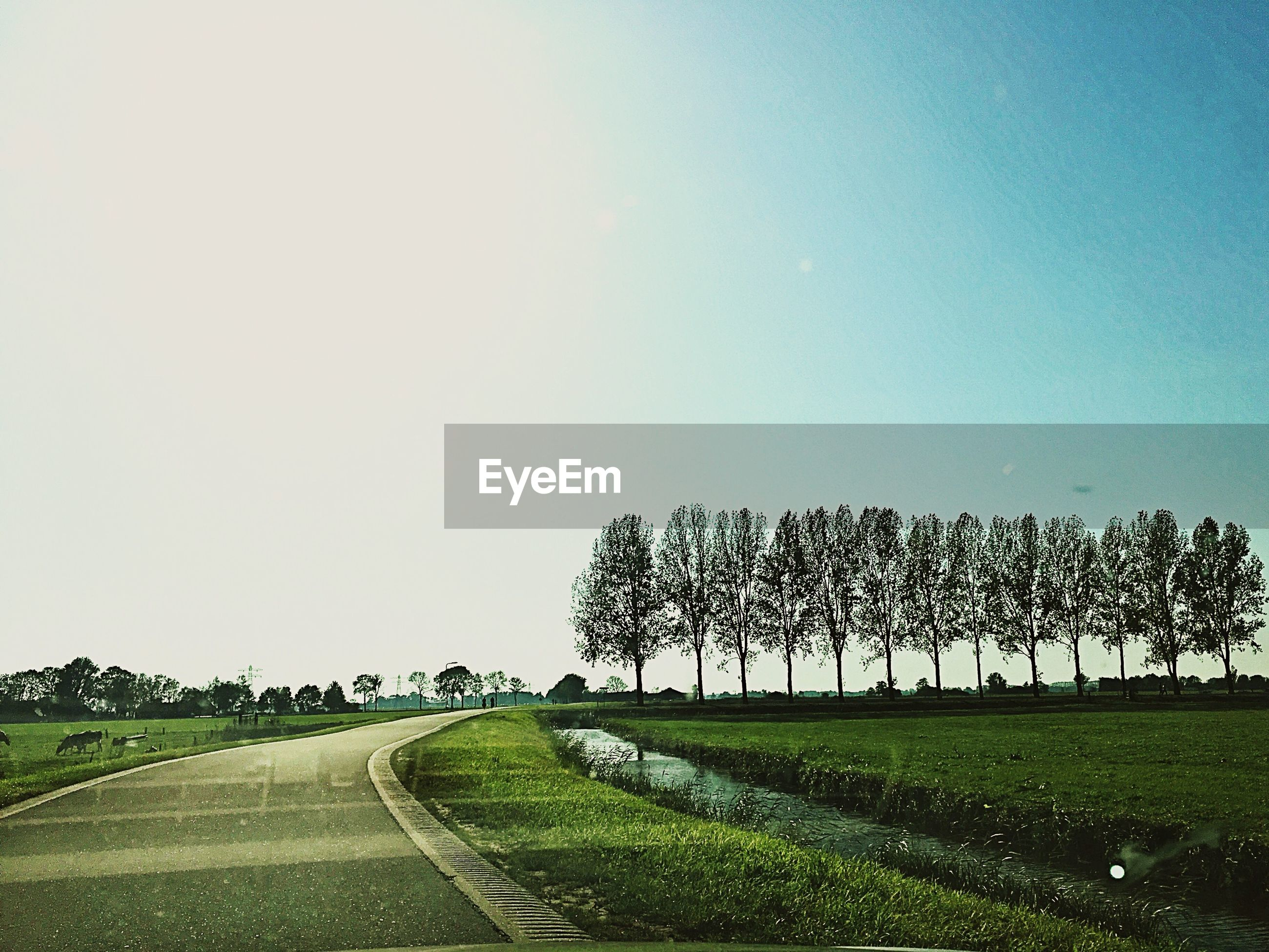 AGRICULTURAL FIELD AGAINST CLEAR SKY