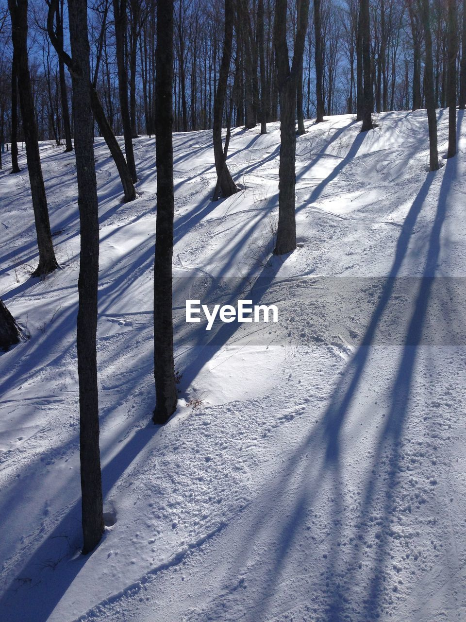 Trees on snow covered landscape during sunny day