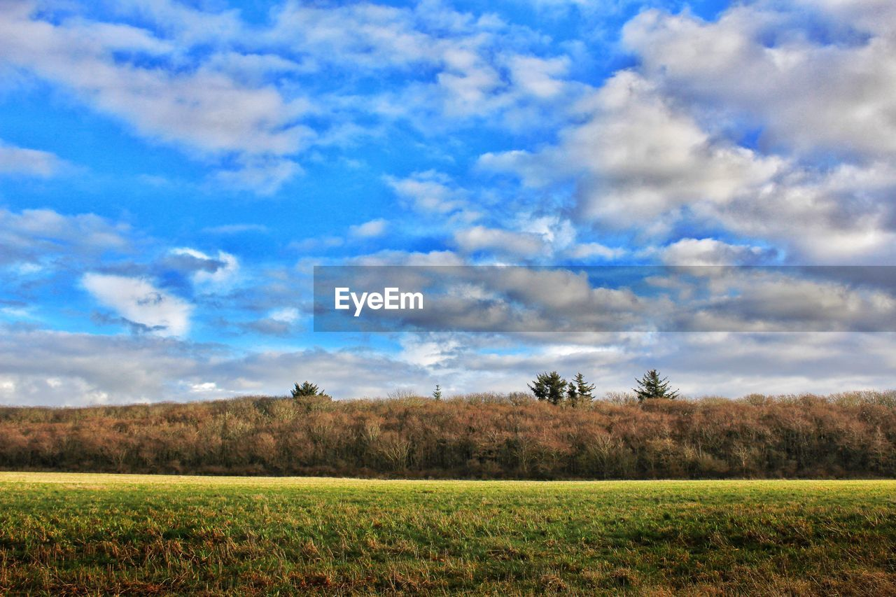 field, cloud - sky, landscape, nature, sky, agriculture, beauty in nature, tranquility, scenics, tranquil scene, grass, no people, outdoors, day, tree, growth, rural scene, plant